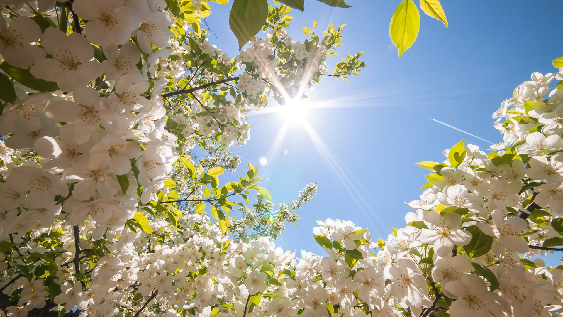 Spring is good news for sellers | Liberty Gate
