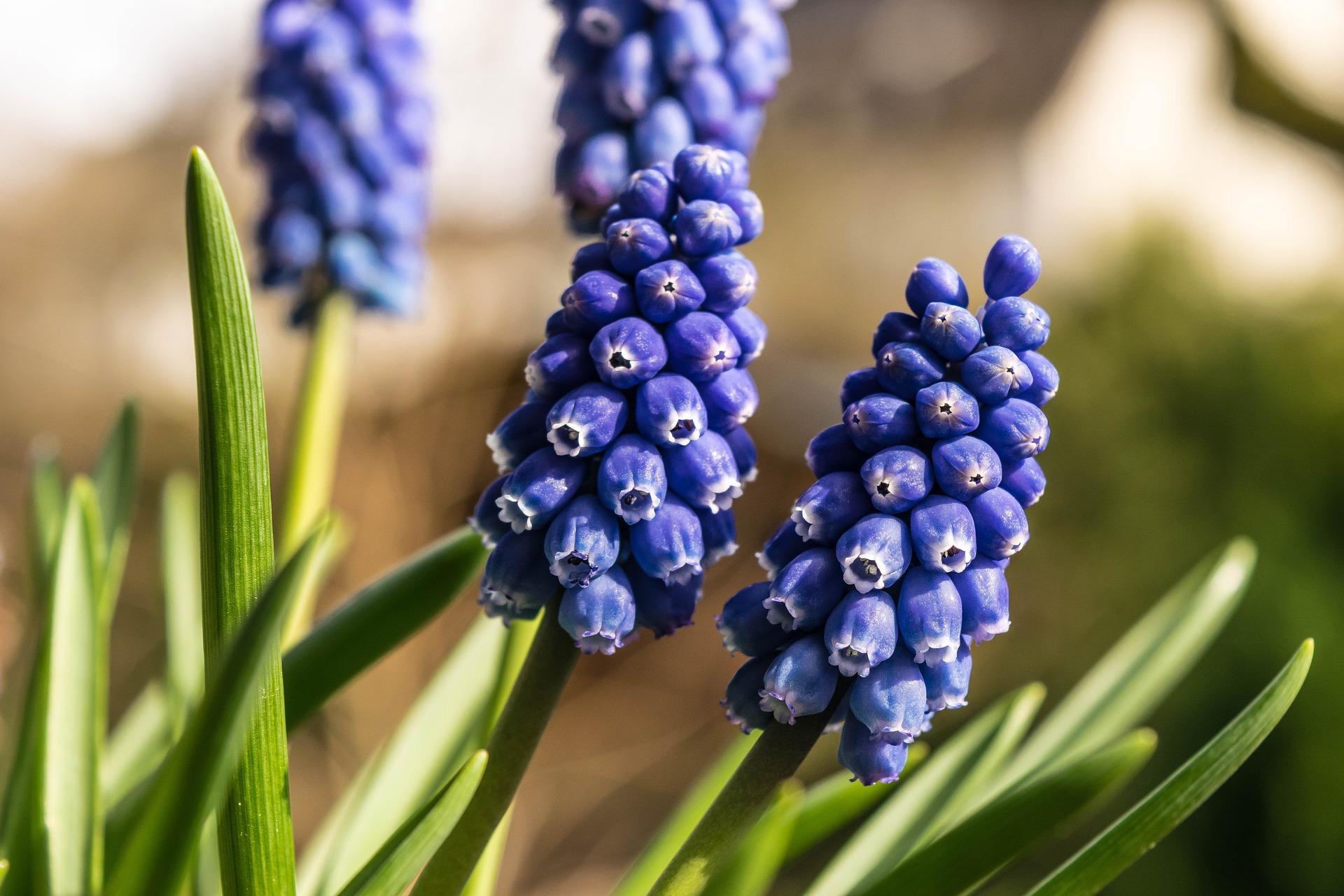 Spring awakening photo