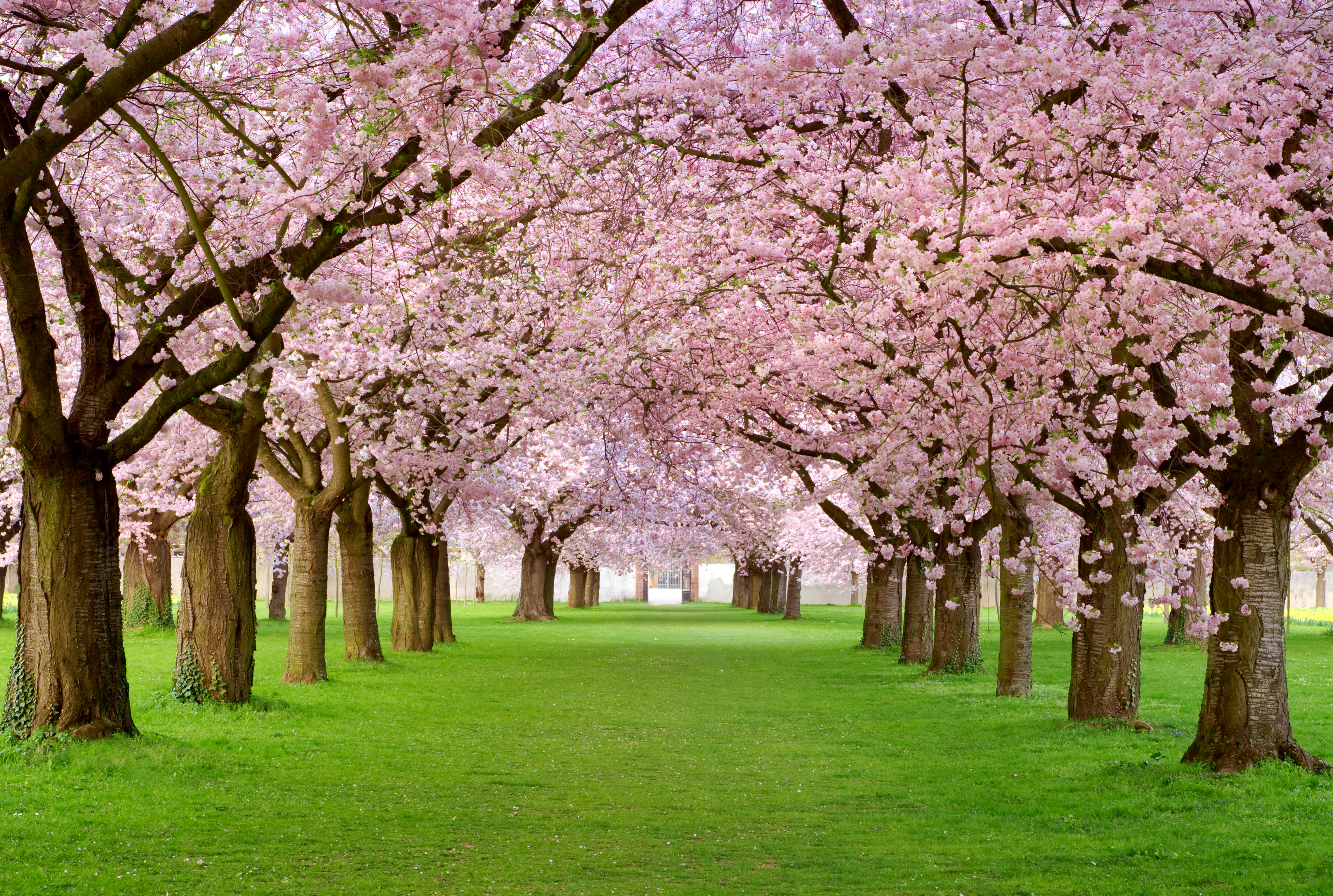 Beautiful Spring Background with Trees | Gallery Yopriceville ...