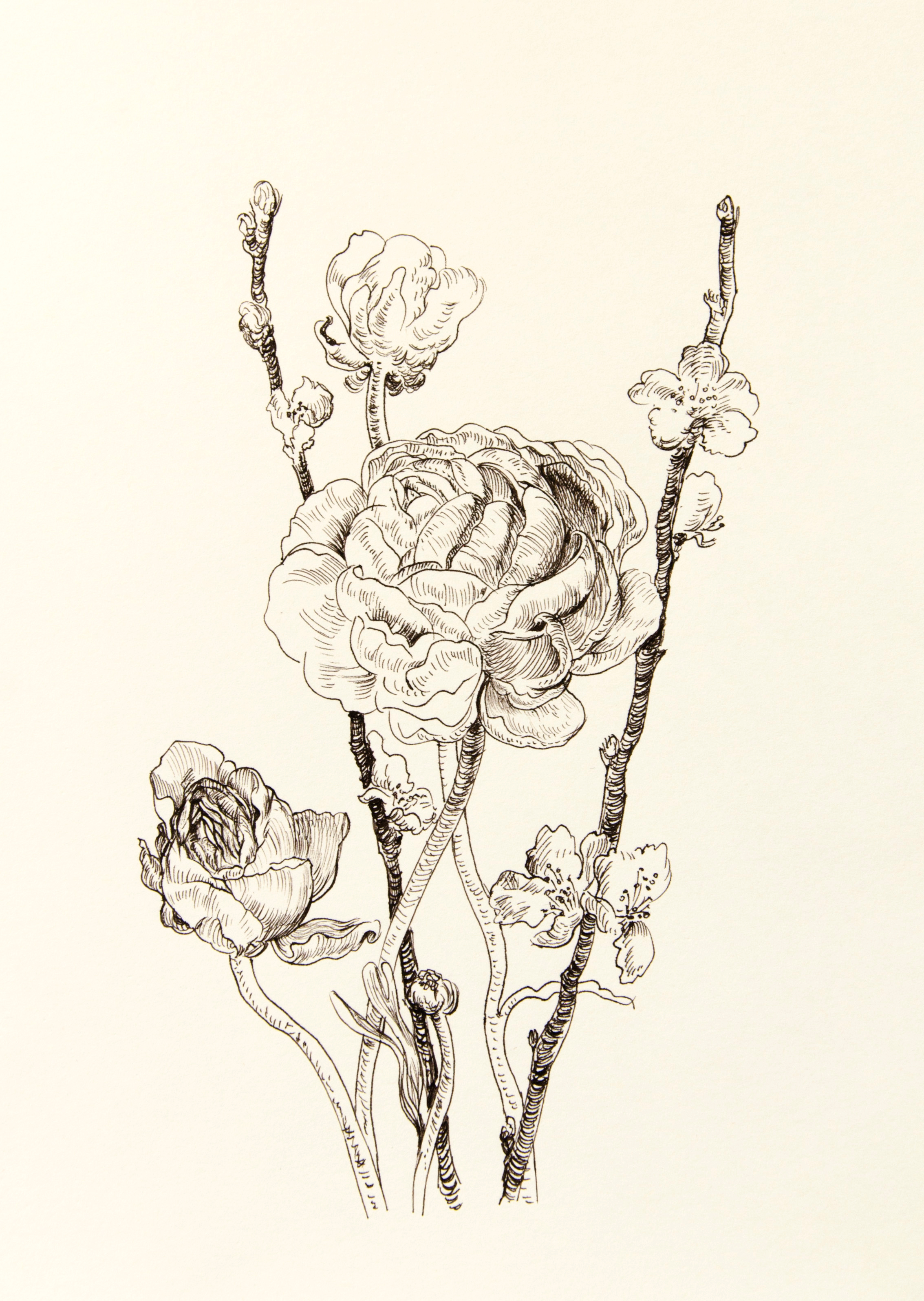 Ranunculus and sakura drawing - Pencil on paper - 20 x 29 cm ...