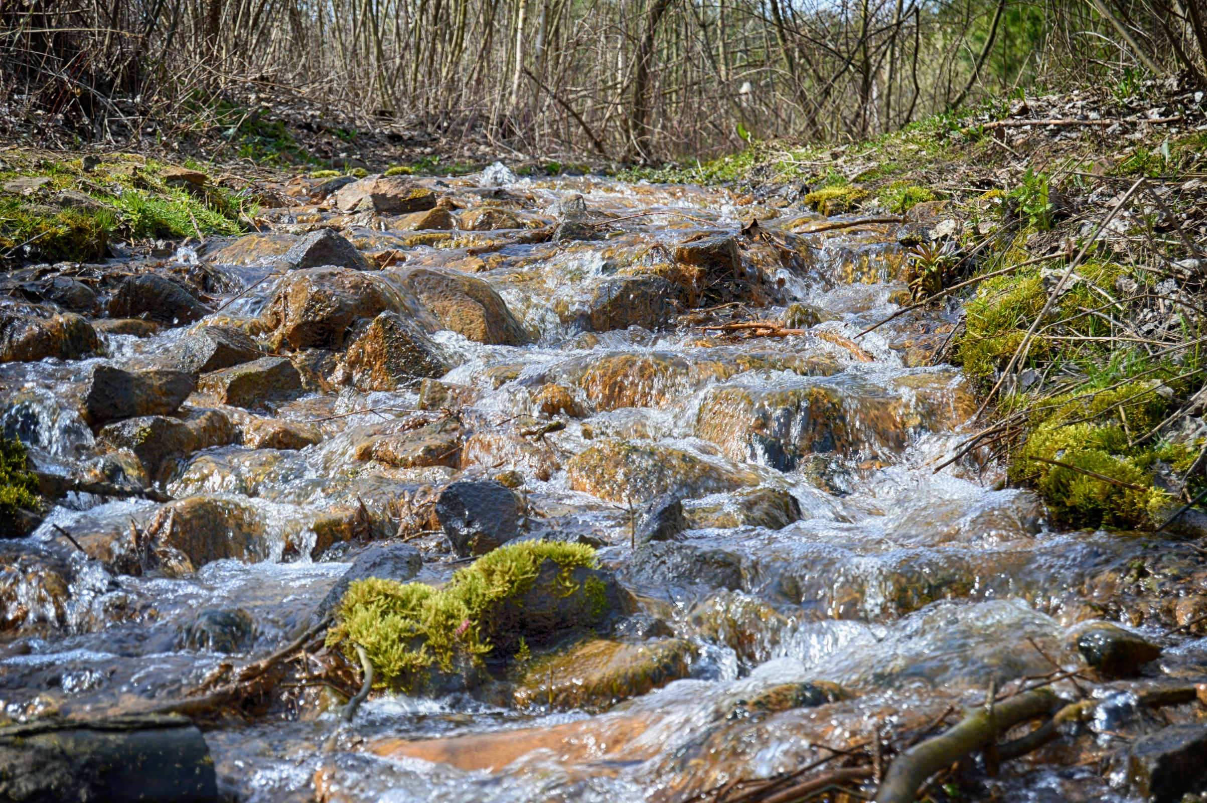 Spring creek in the wood photo