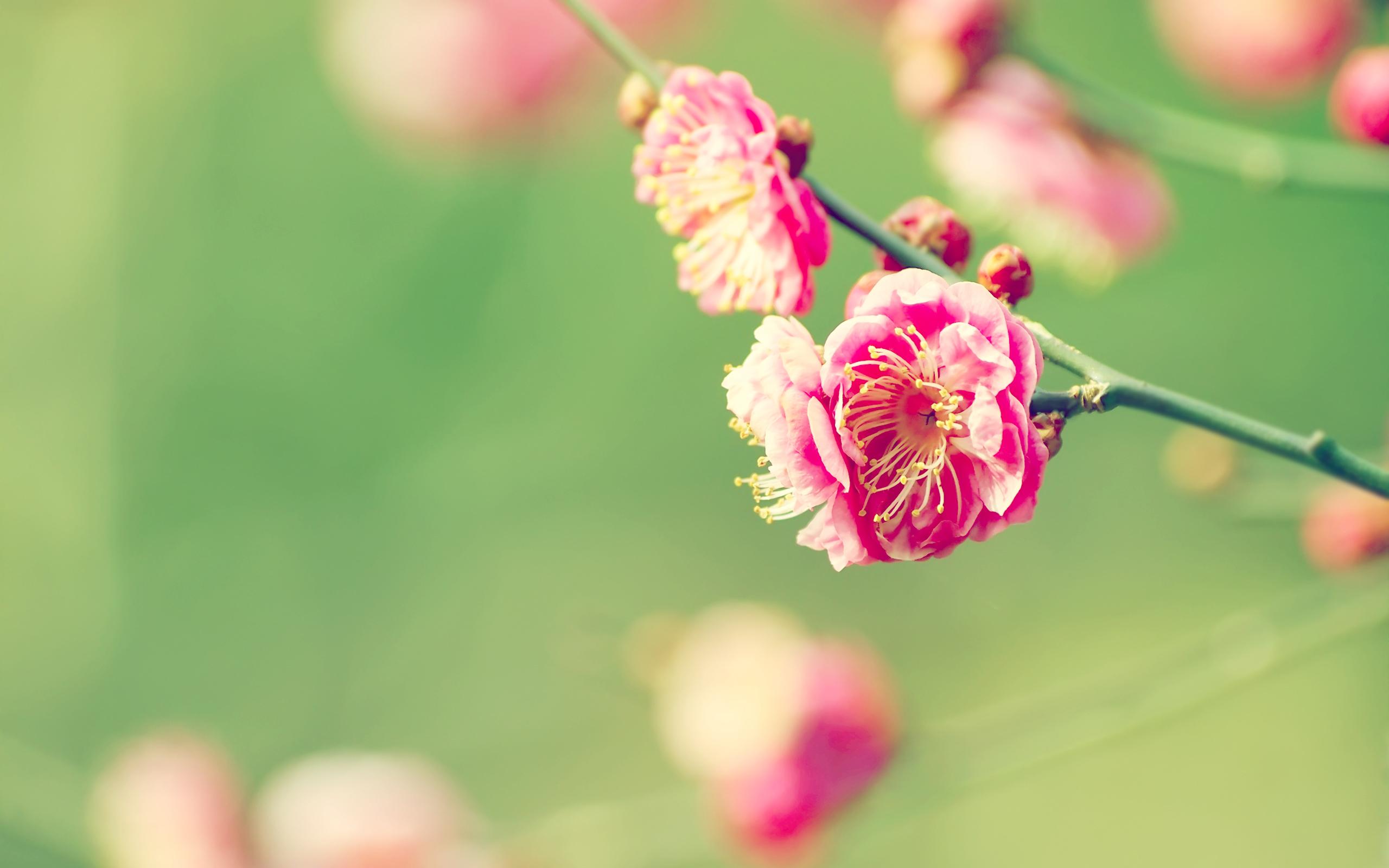 Free Photo Spring Flower Nature Orange Pretty Free Download