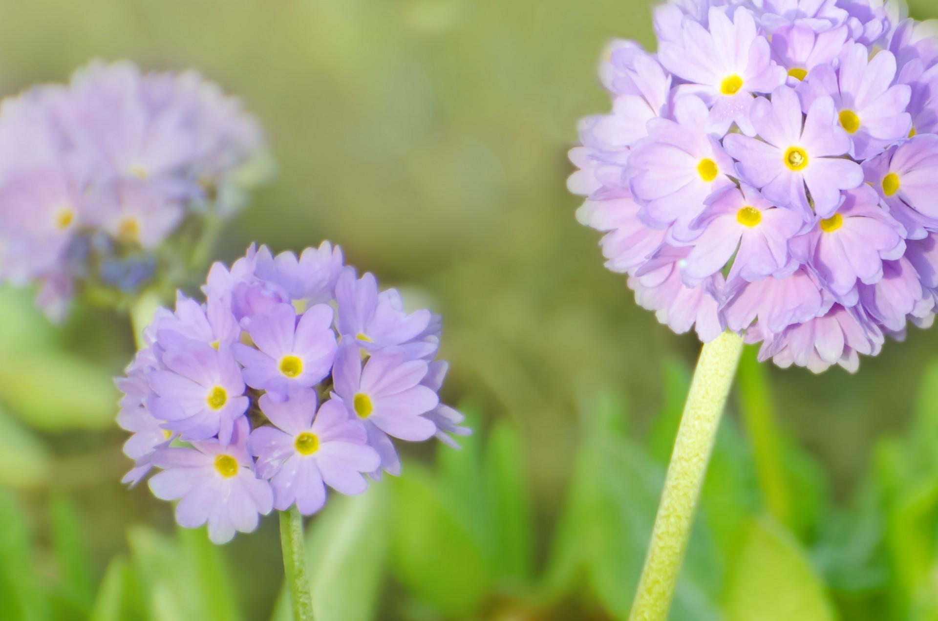 Free Photo Spring Flower Romantic Spring Theme Free Download