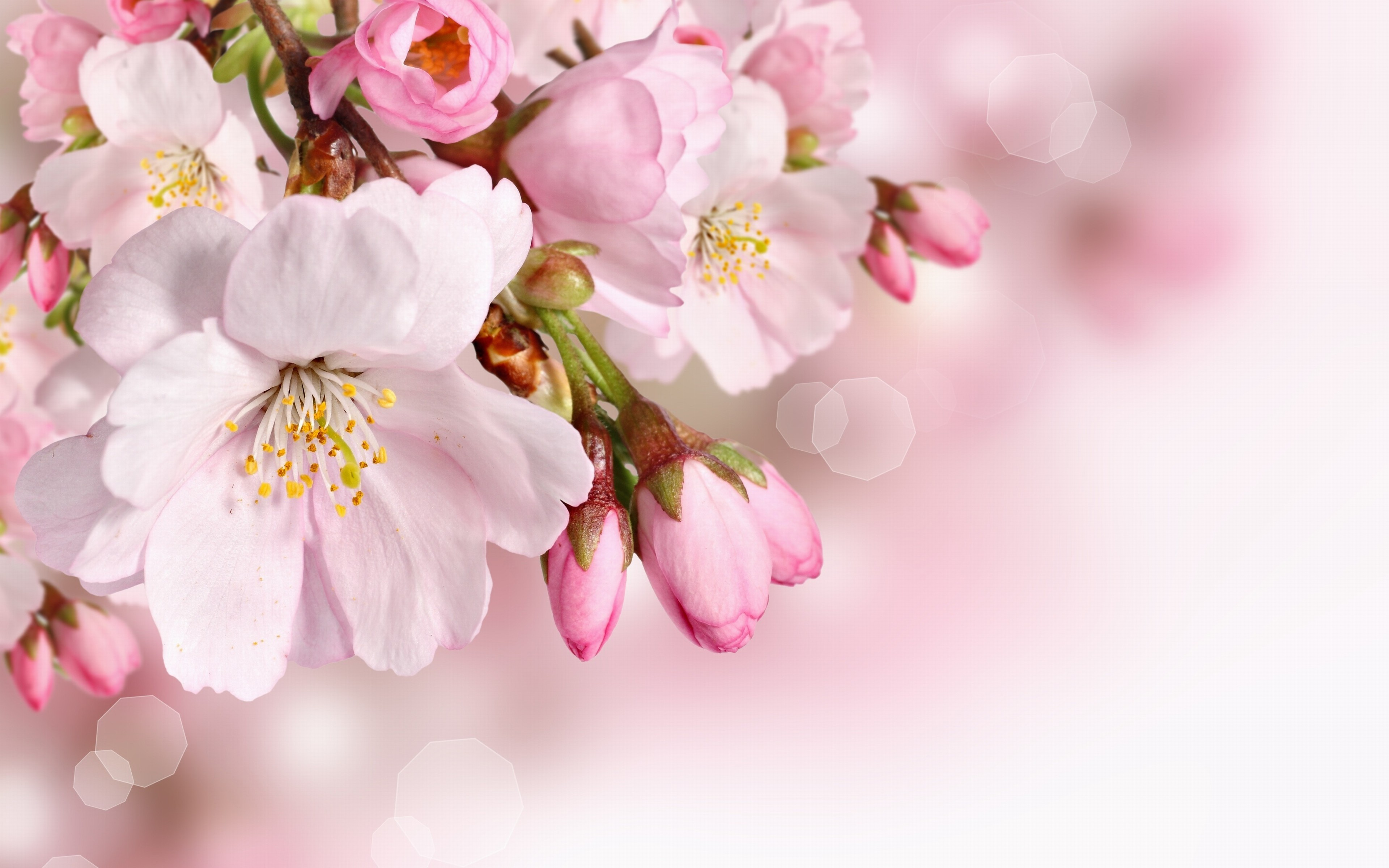 Free photo spring flower outside natural nature free download spring flower mightylinksfo