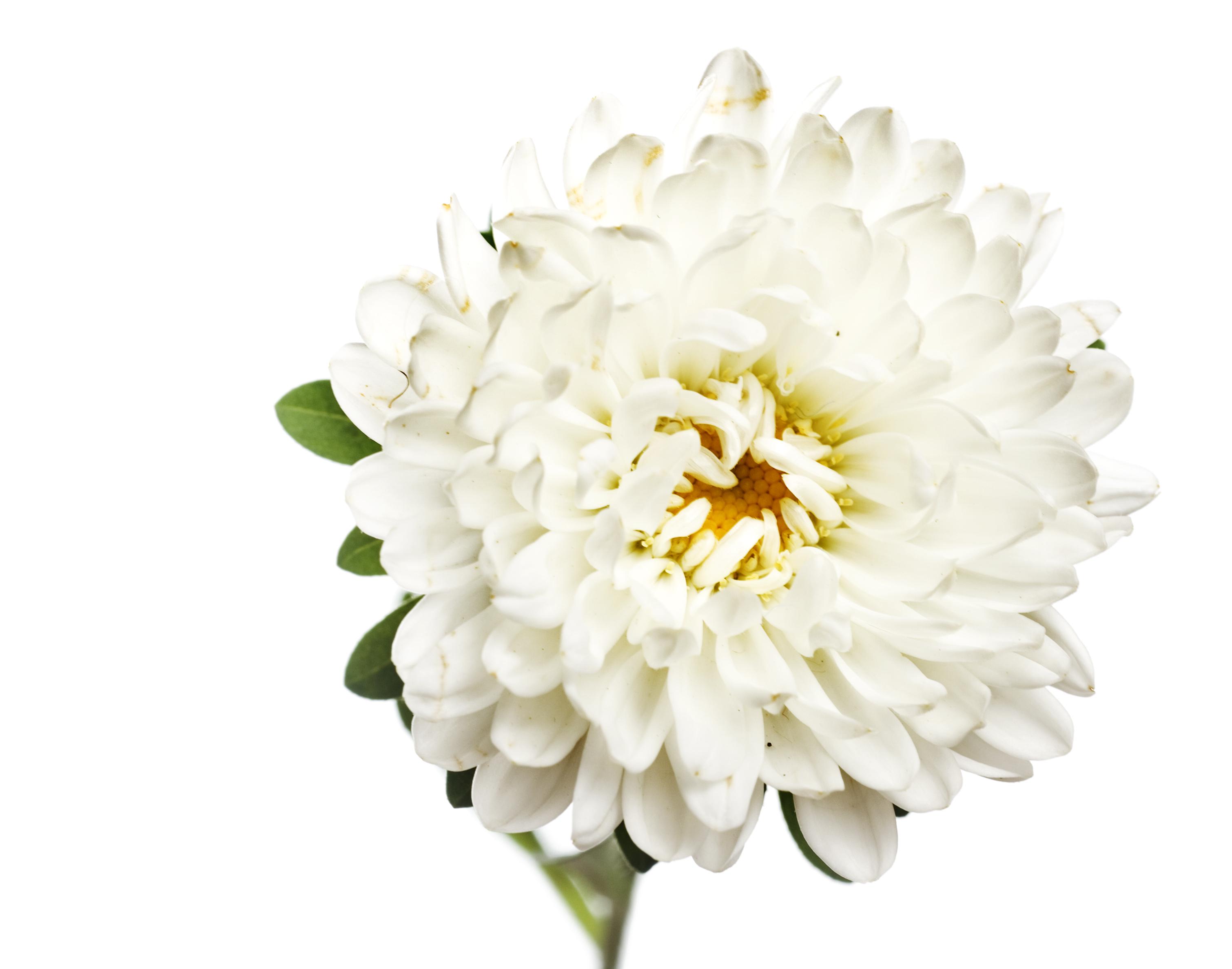 spring flower, Closeup, Detail, Flora, Floral, HQ Photo