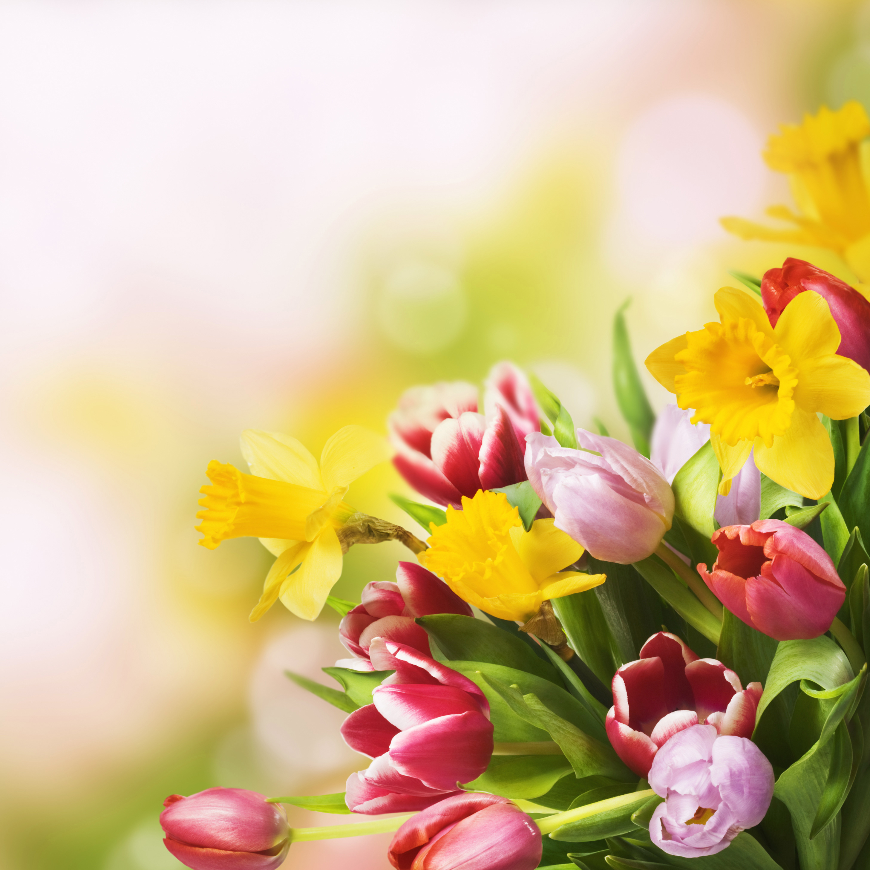 Spring Flowers Background | Gallery Yopriceville - High-Quality ...