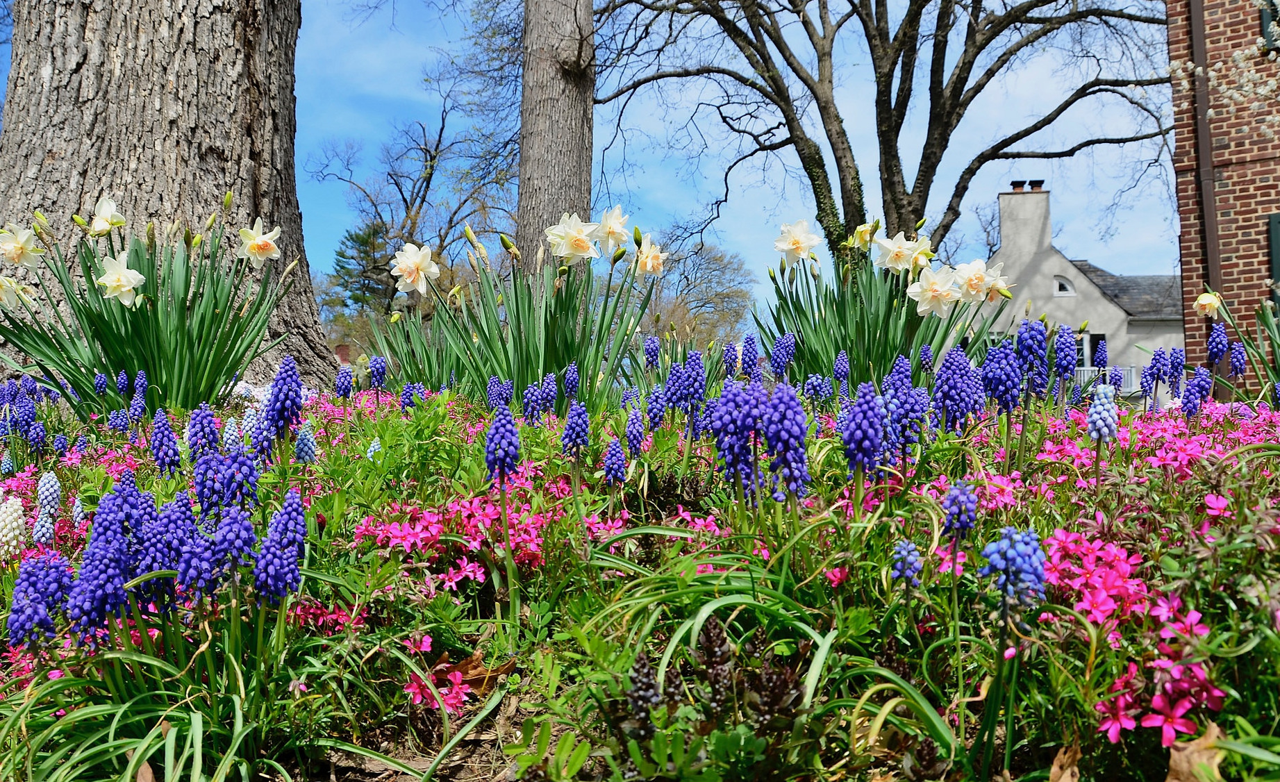 Free photo spring flowers nature natural outdoor free spring flowers izmirmasajfo
