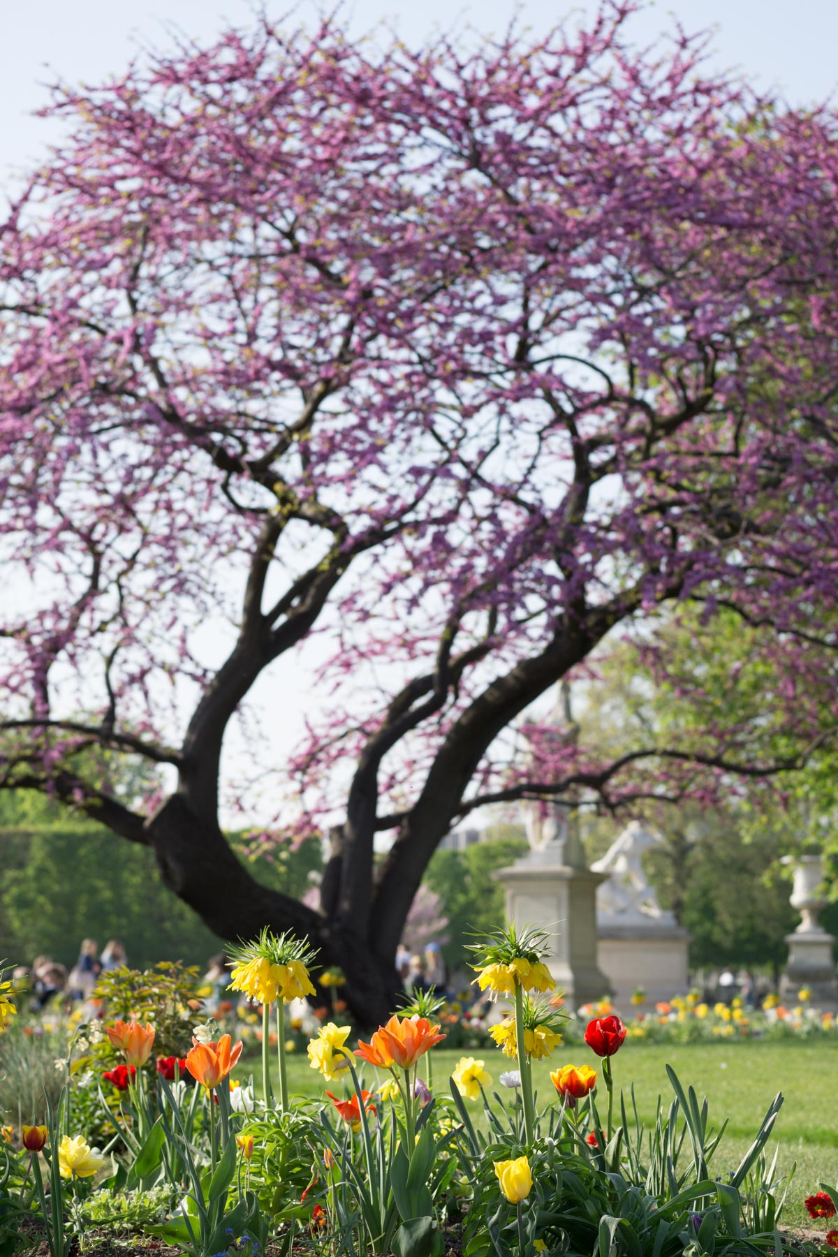 Paree in Bloom - Your Guide to Paris Spring Flowers | Dark Blue Stripes