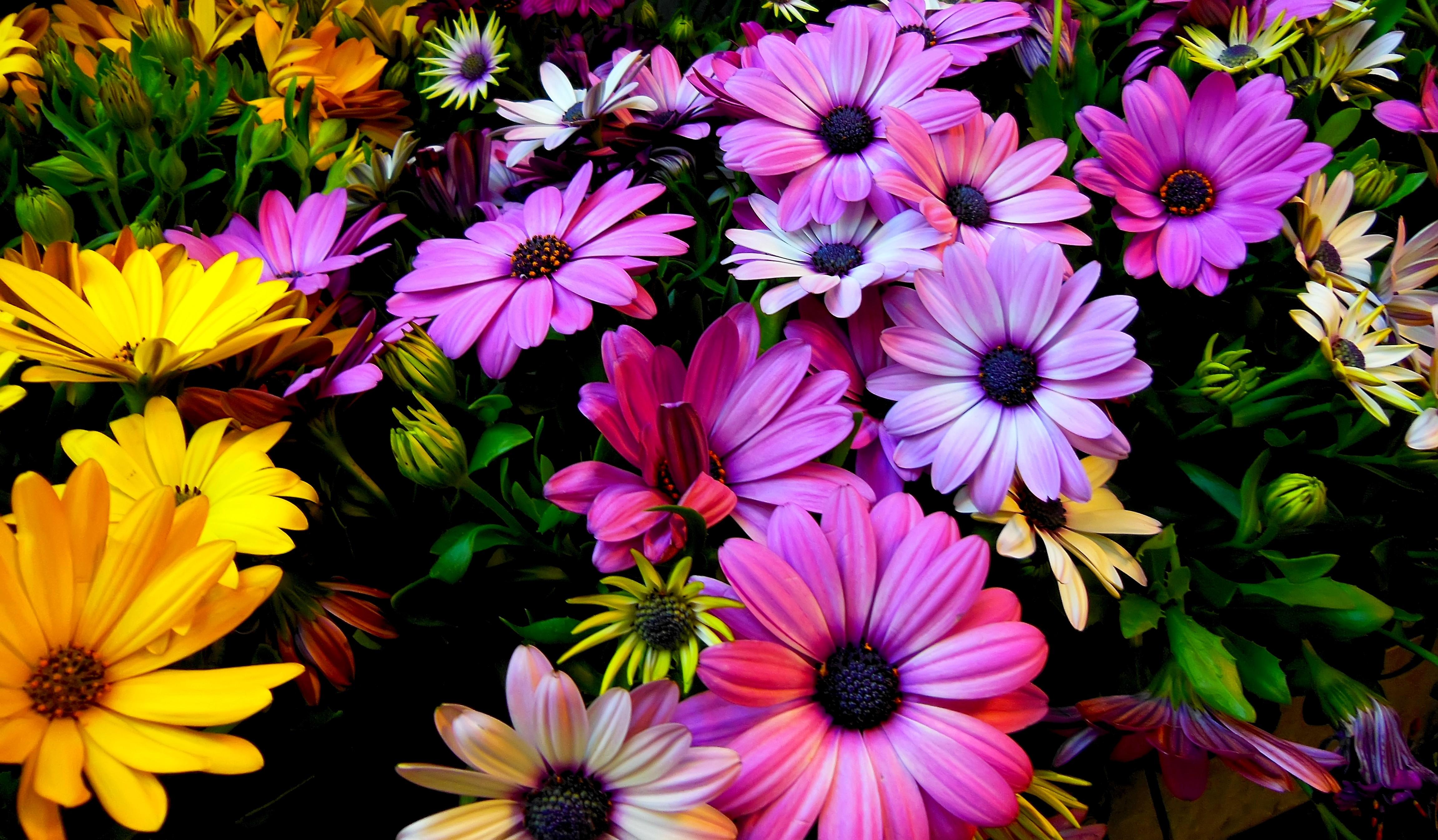 Free Photo Spring Flowers Growing Gardening Garden Free