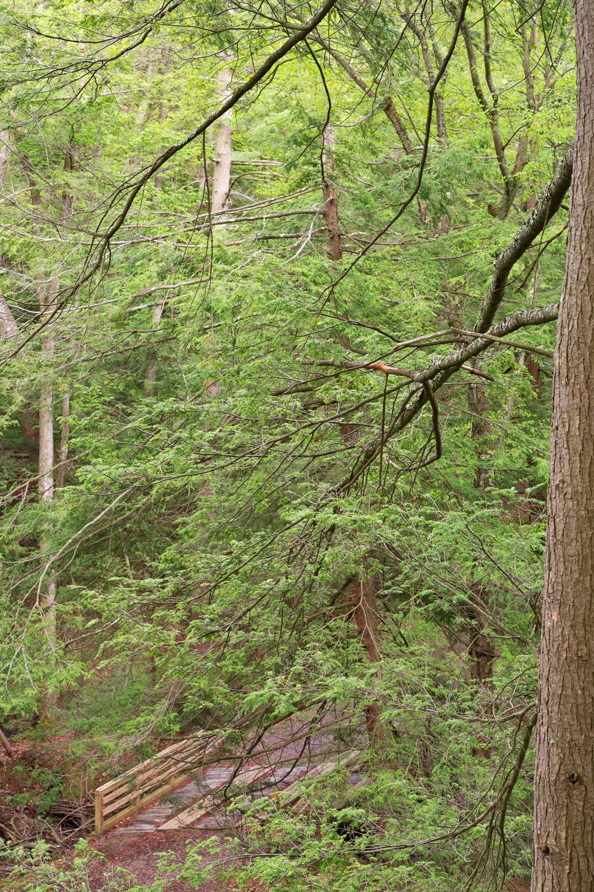 Spring fresh forest vista photo