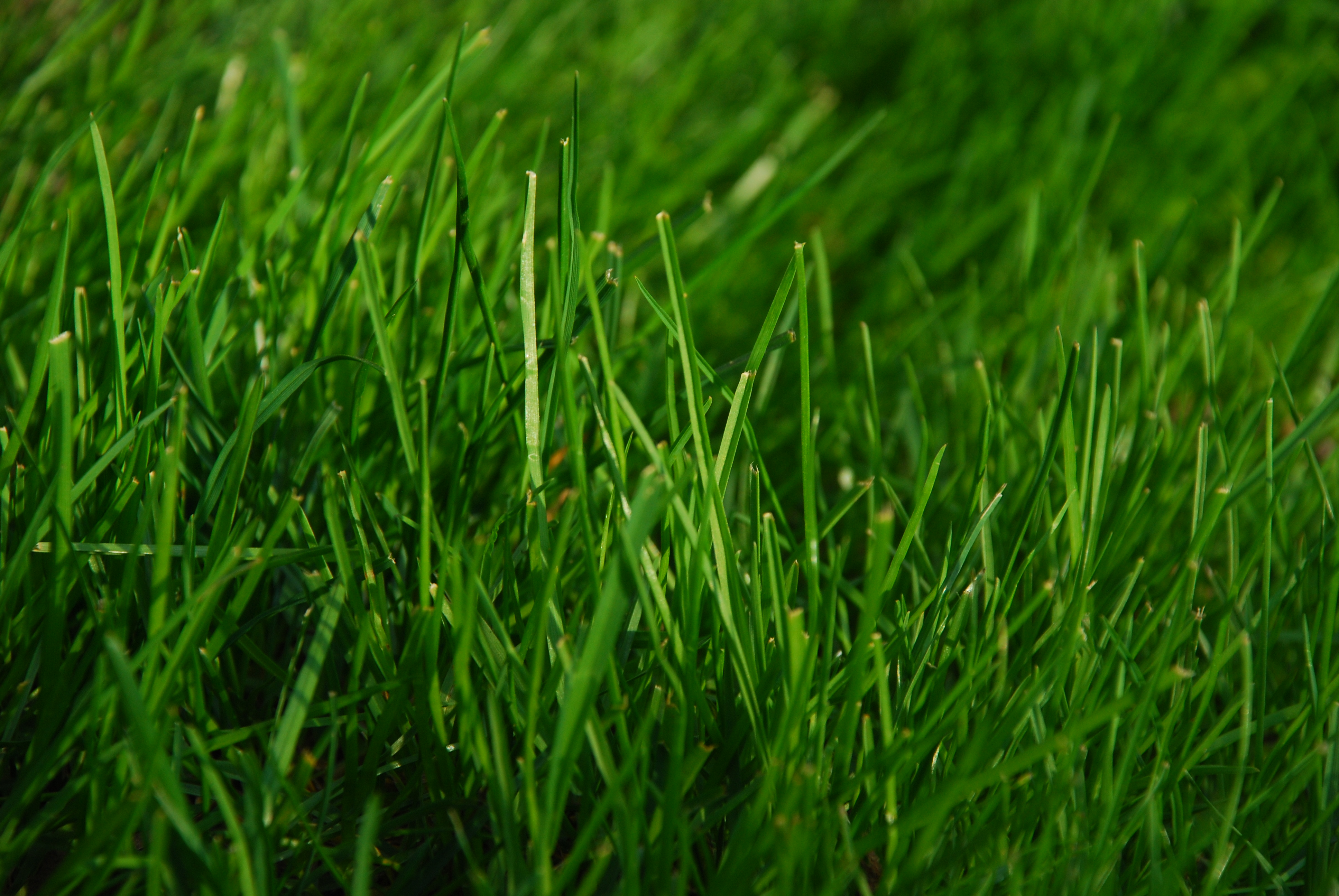 free photo spring green grass plant nature outdoors free