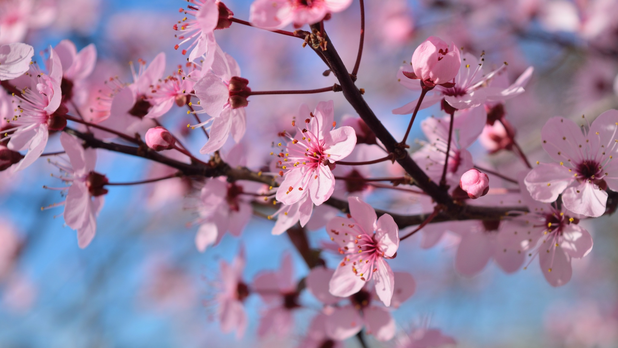 Free Photo Spring Season Spring White Wings Free Download