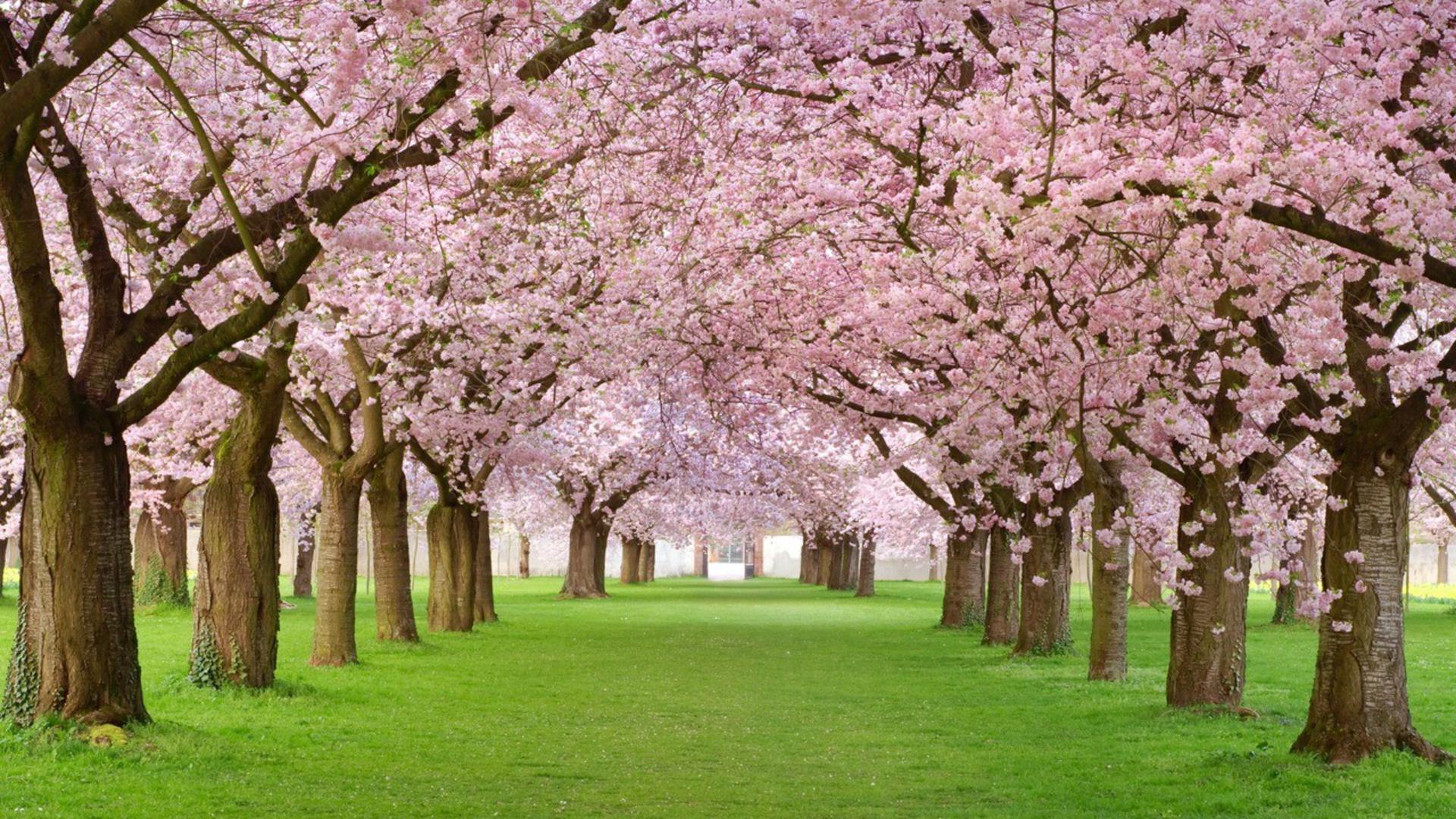 Spring-Season-Wallpapers-HD-HWZ008788 - easylife-online.com