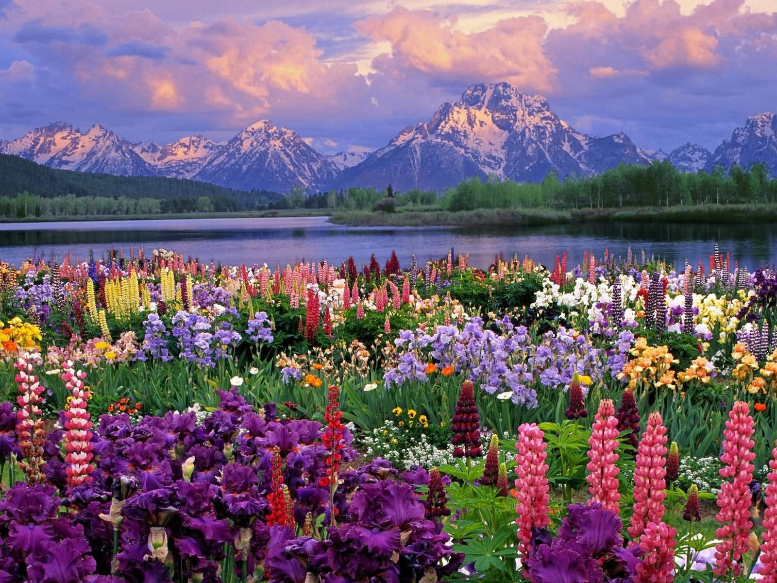 Free photo spring season season purple spring free download spring season mightylinksfo