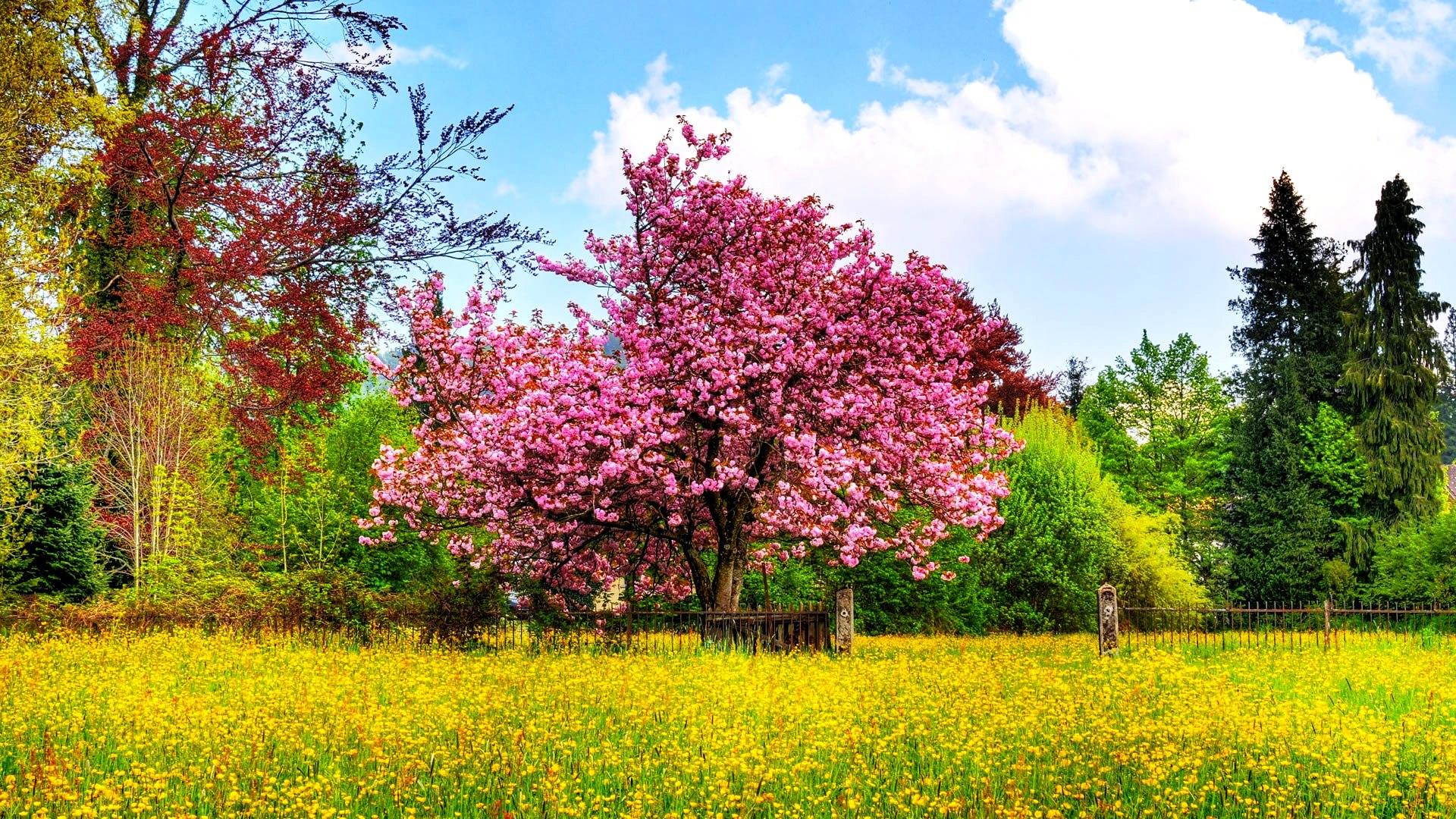Free photo spring season single spring yellow free download spring season mightylinksfo