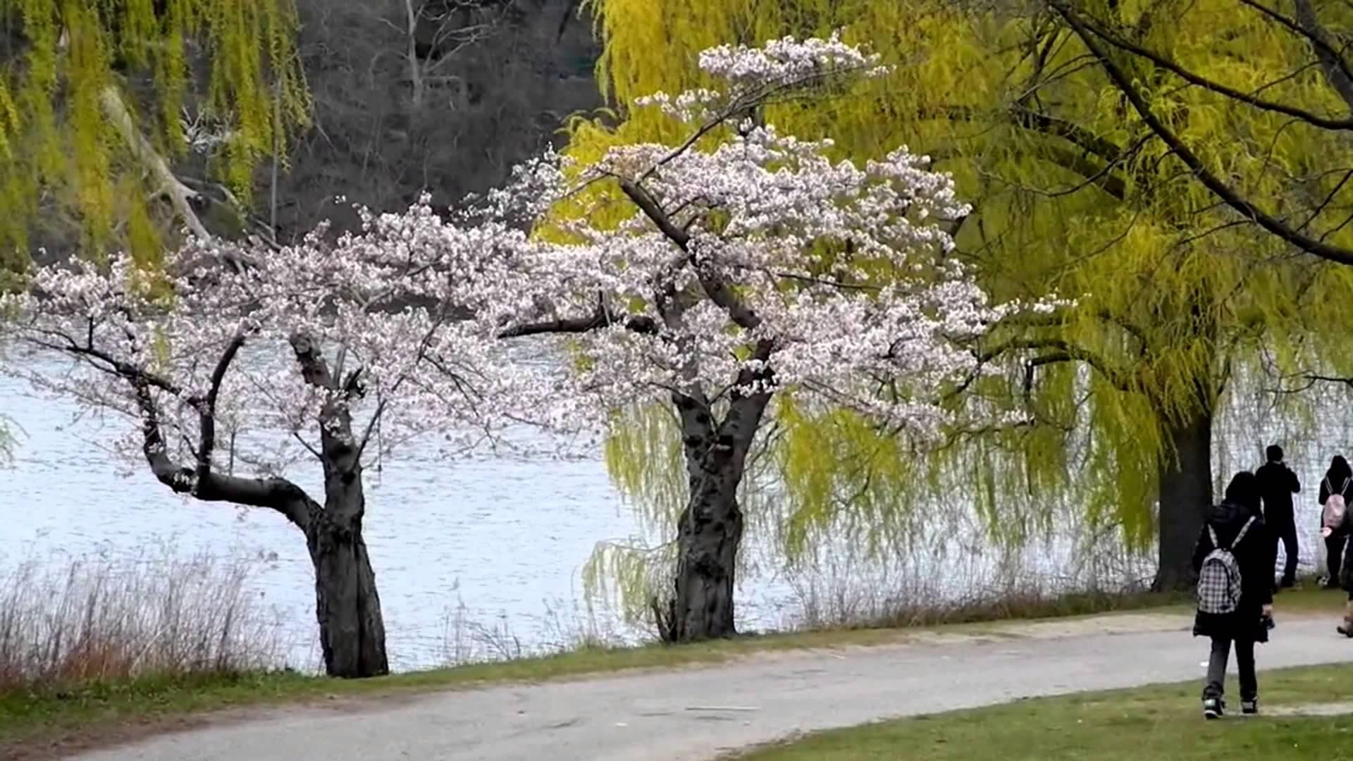 Happy Spring Flowering Trees-Blooming Trees in Happy Spring - YouTube
