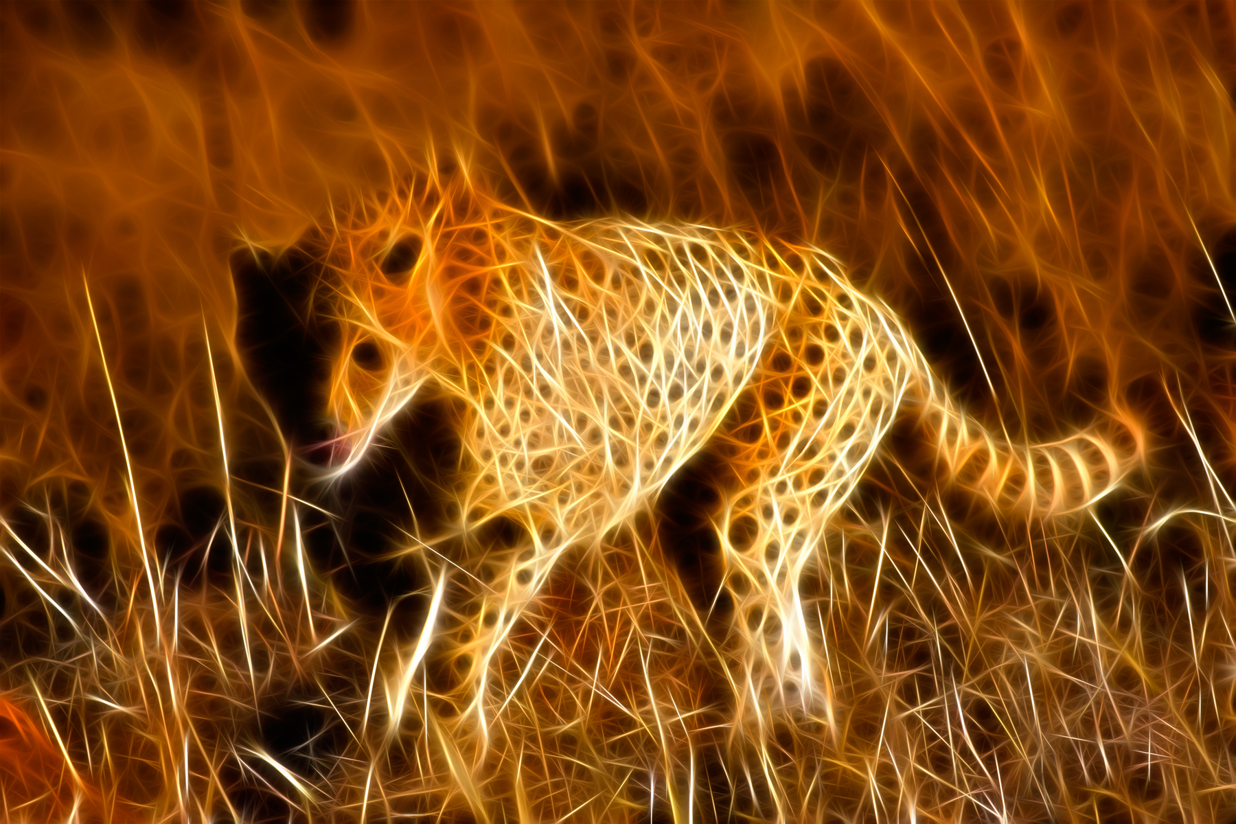 Sprinting Cheetah Abstract, Abstract, Spots, Photomanipulatio, Picture, HQ Photo