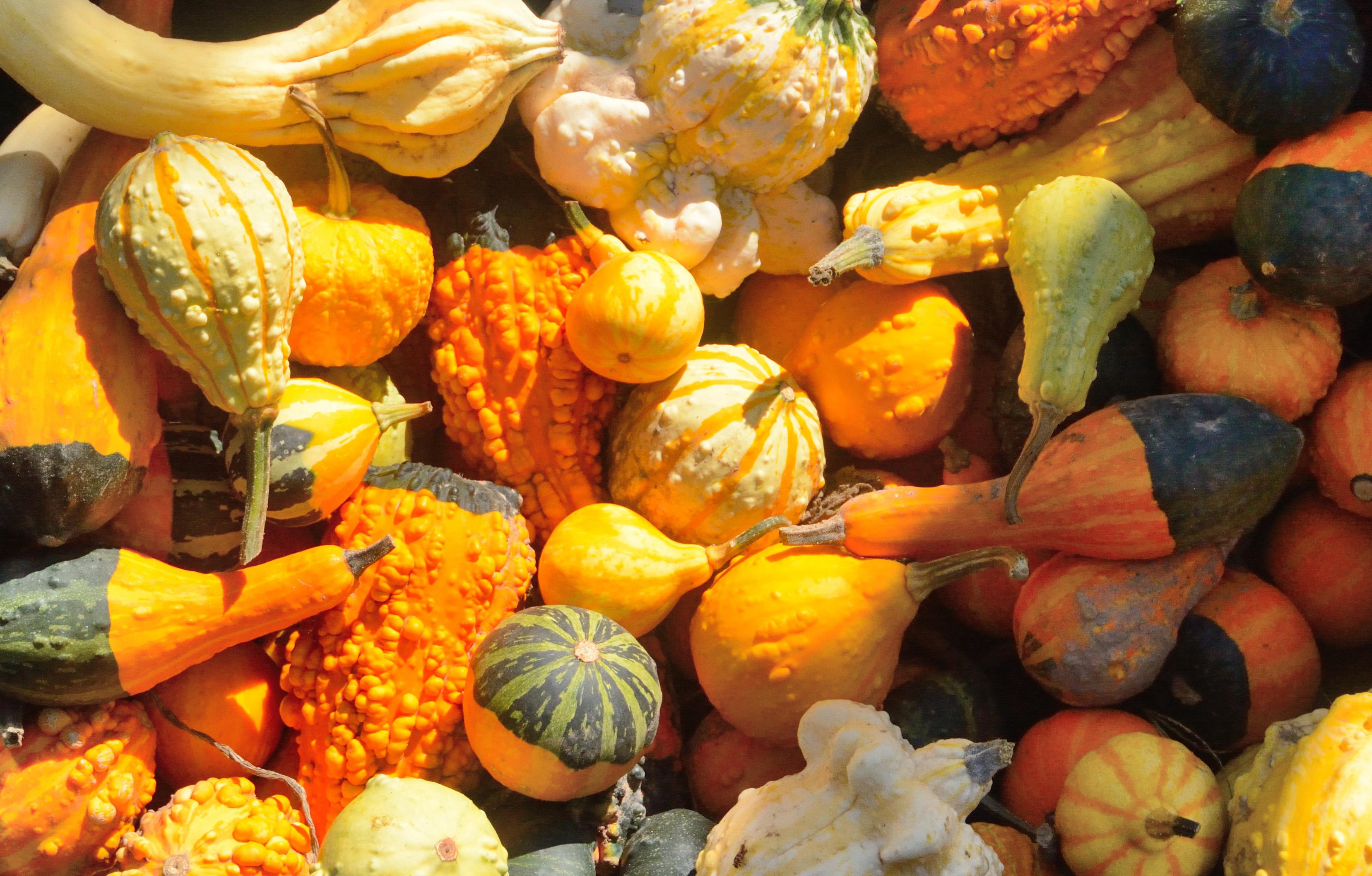 Squash and pumpkins photo