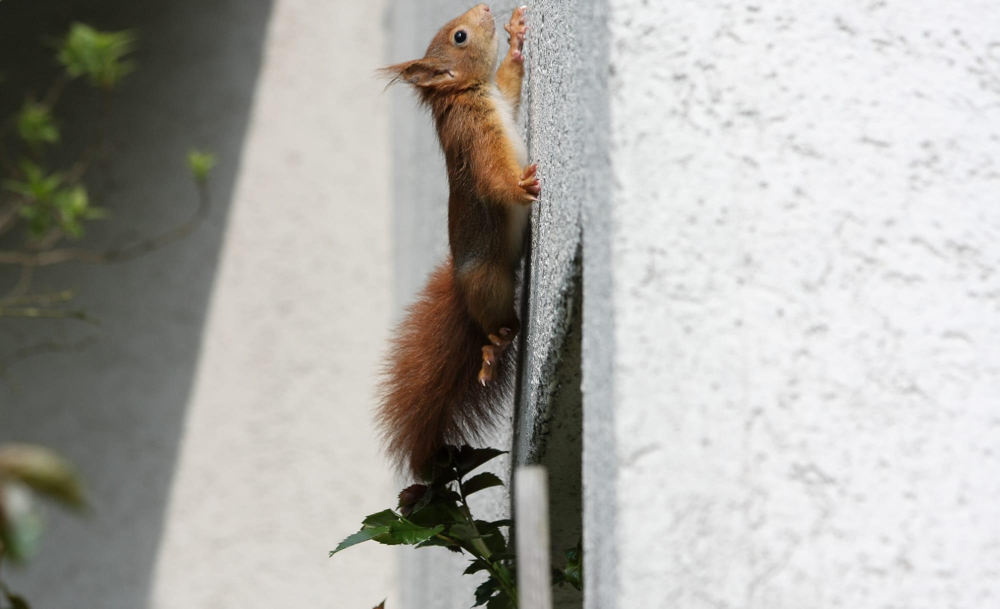 Why Are Squirrels in Attic in Winter? | Terminix