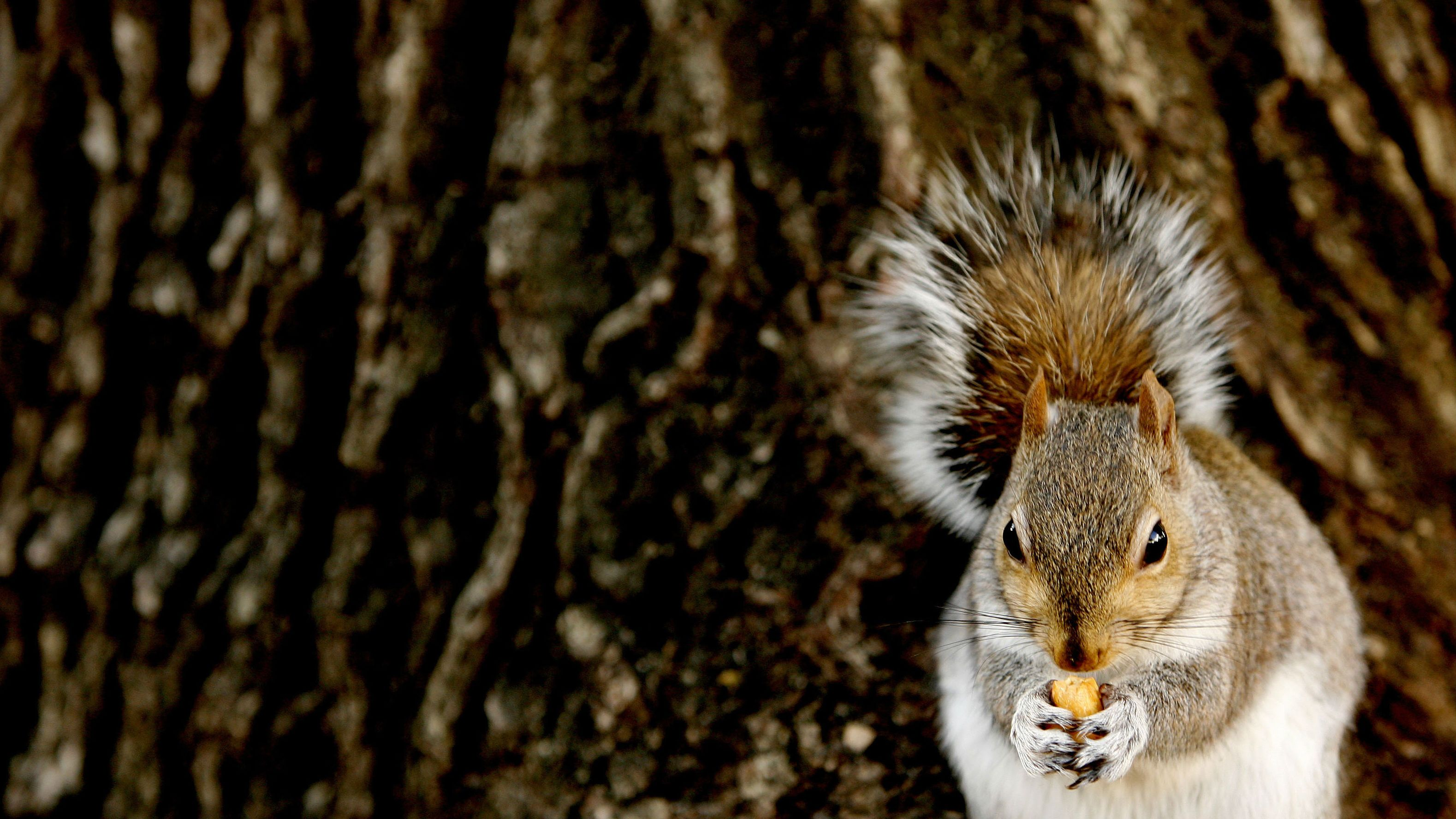 Scientists gave squirrels fitness trackers and found that males are ...
