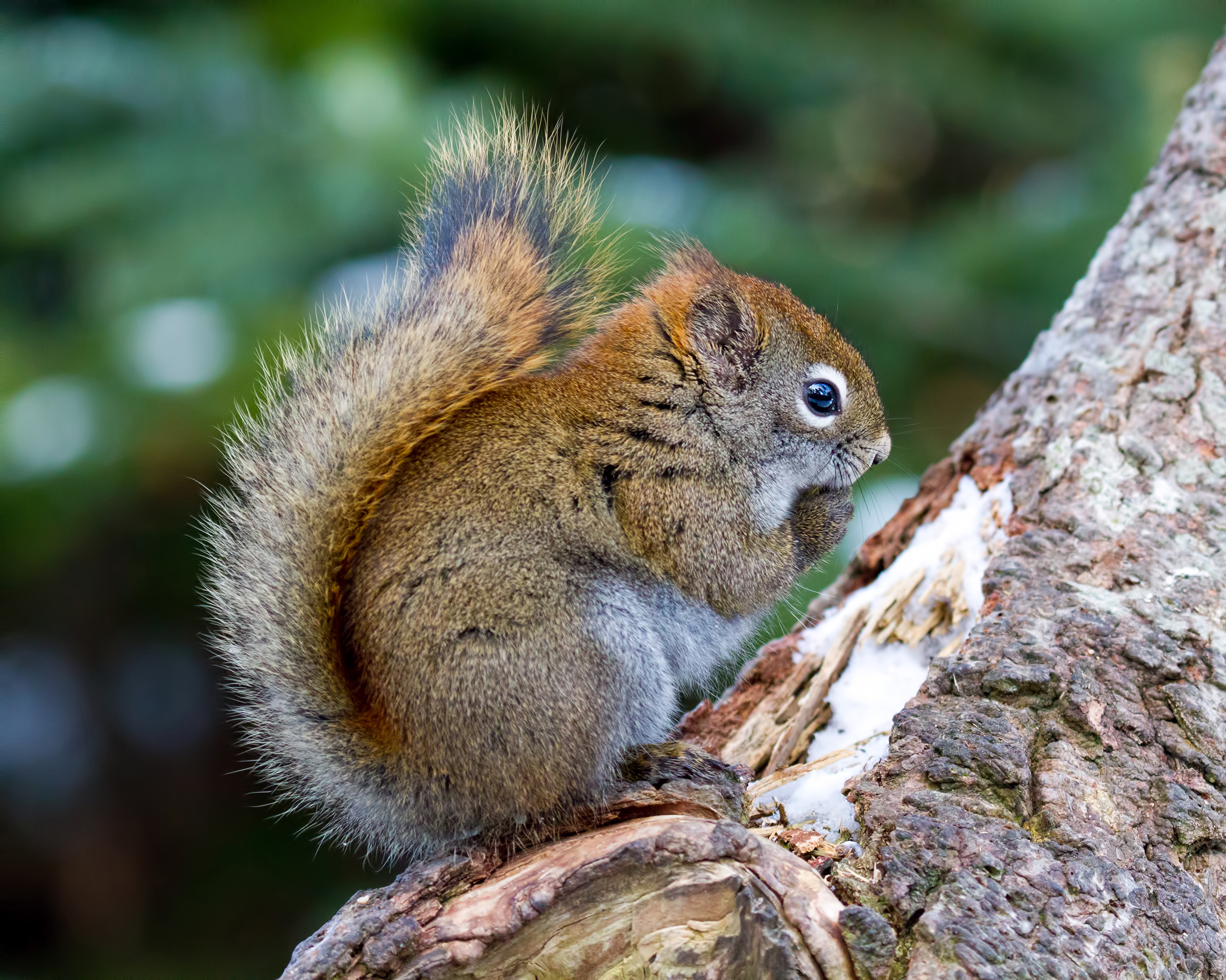 Squirrel, Adorable, Search, Park, Paw, HQ Photo