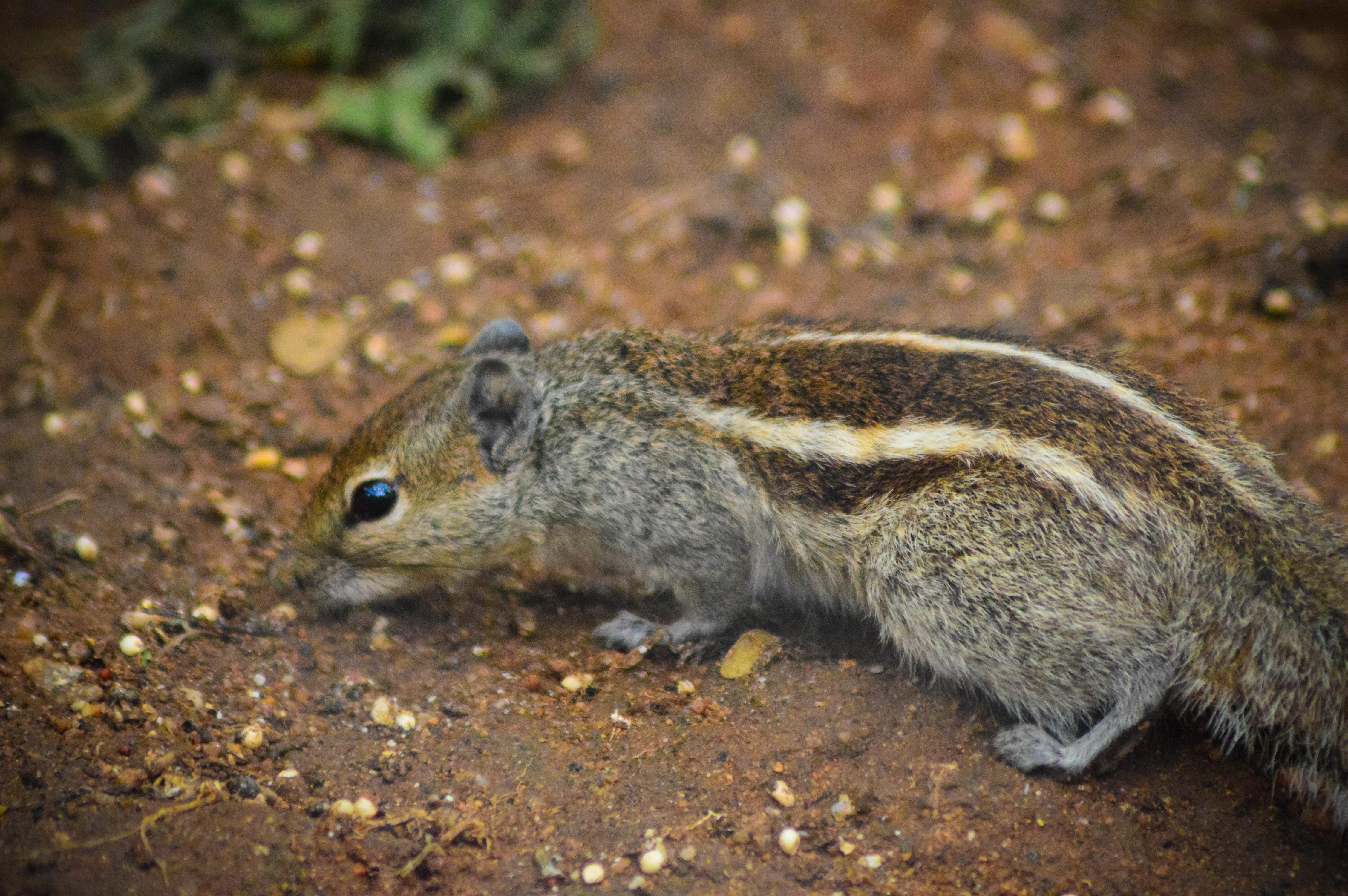 Squirrel, Animal, Beautiful, Colors, Eting, HQ Photo