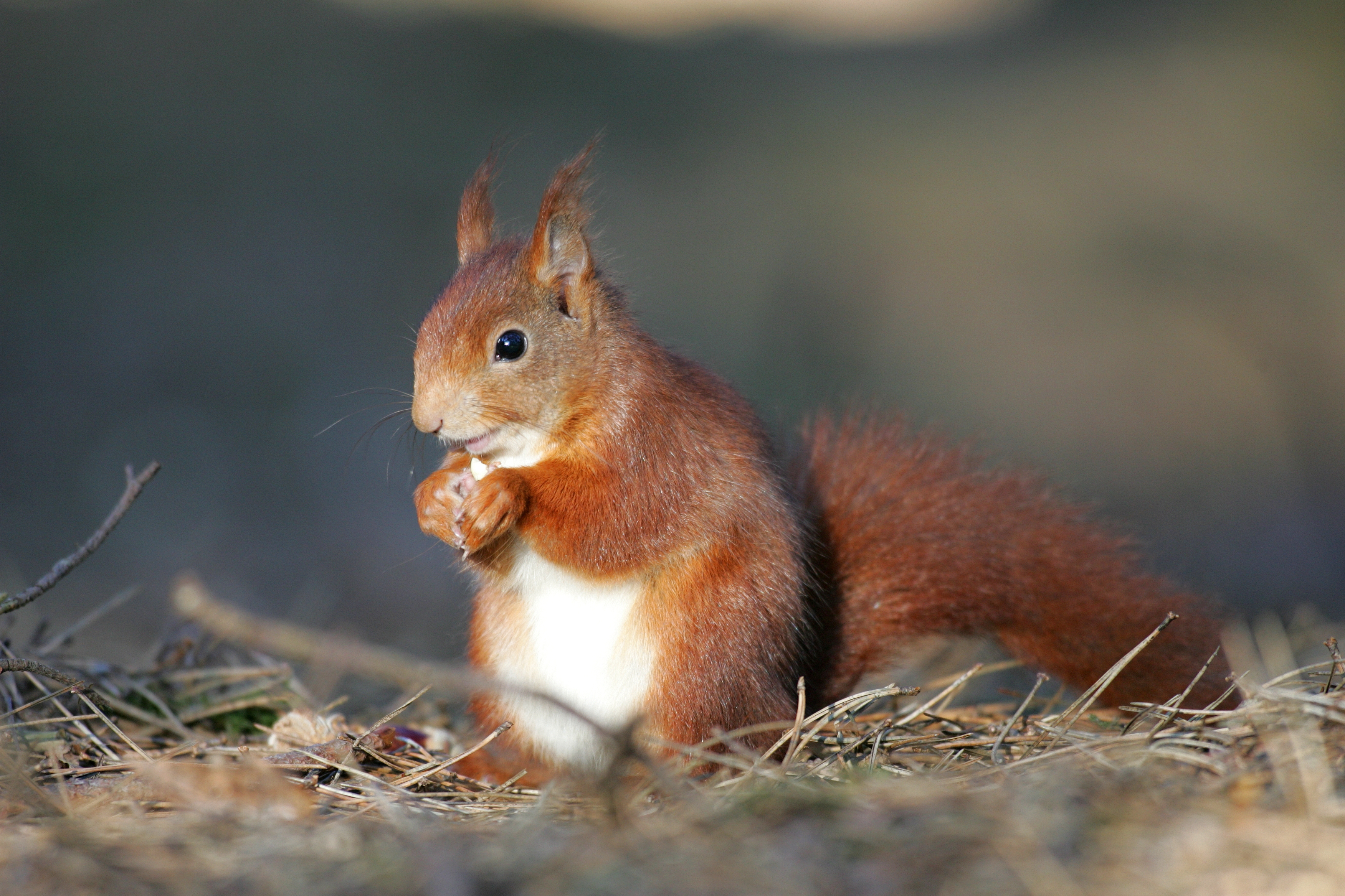 Secret Squirrel – Only in the Dales