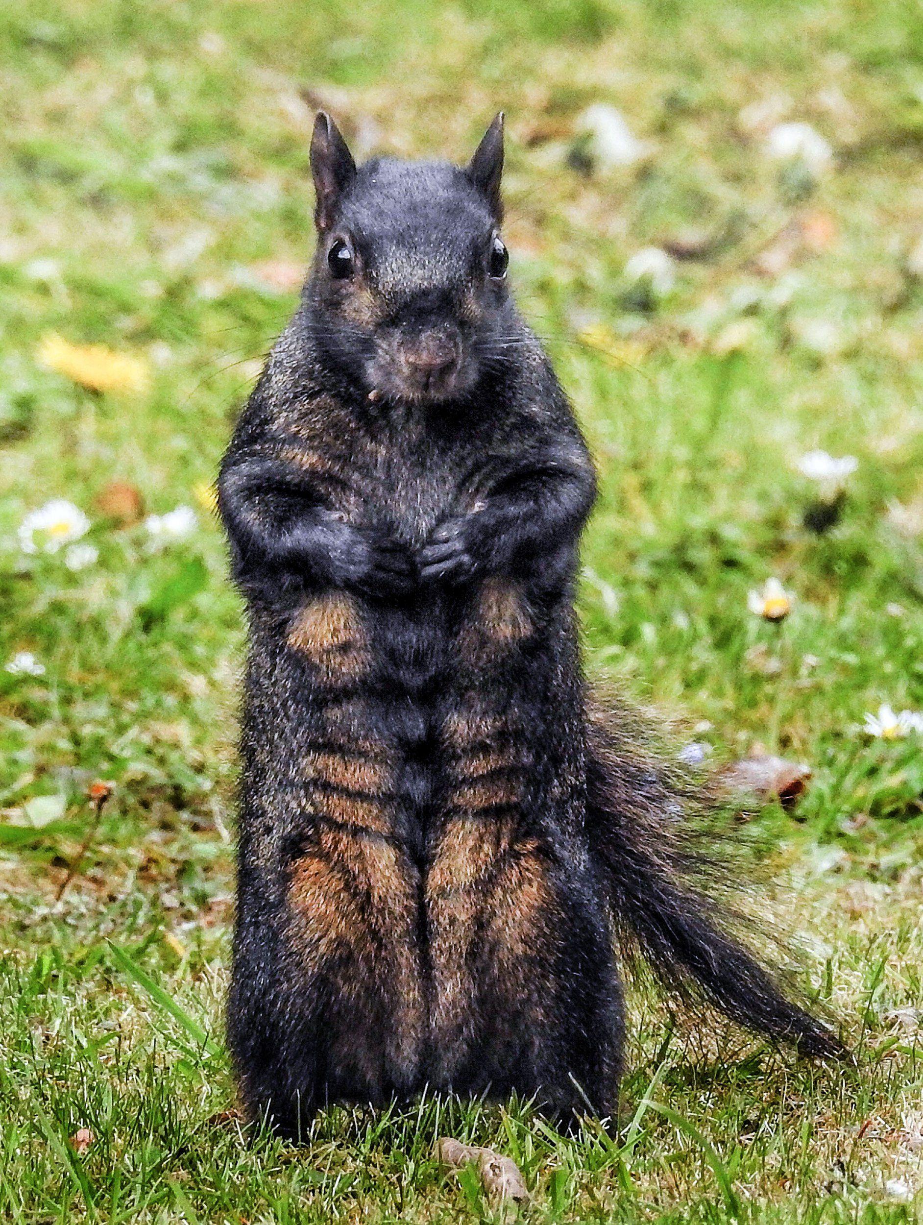 Top 89 Squirrel - HD Animal Spot