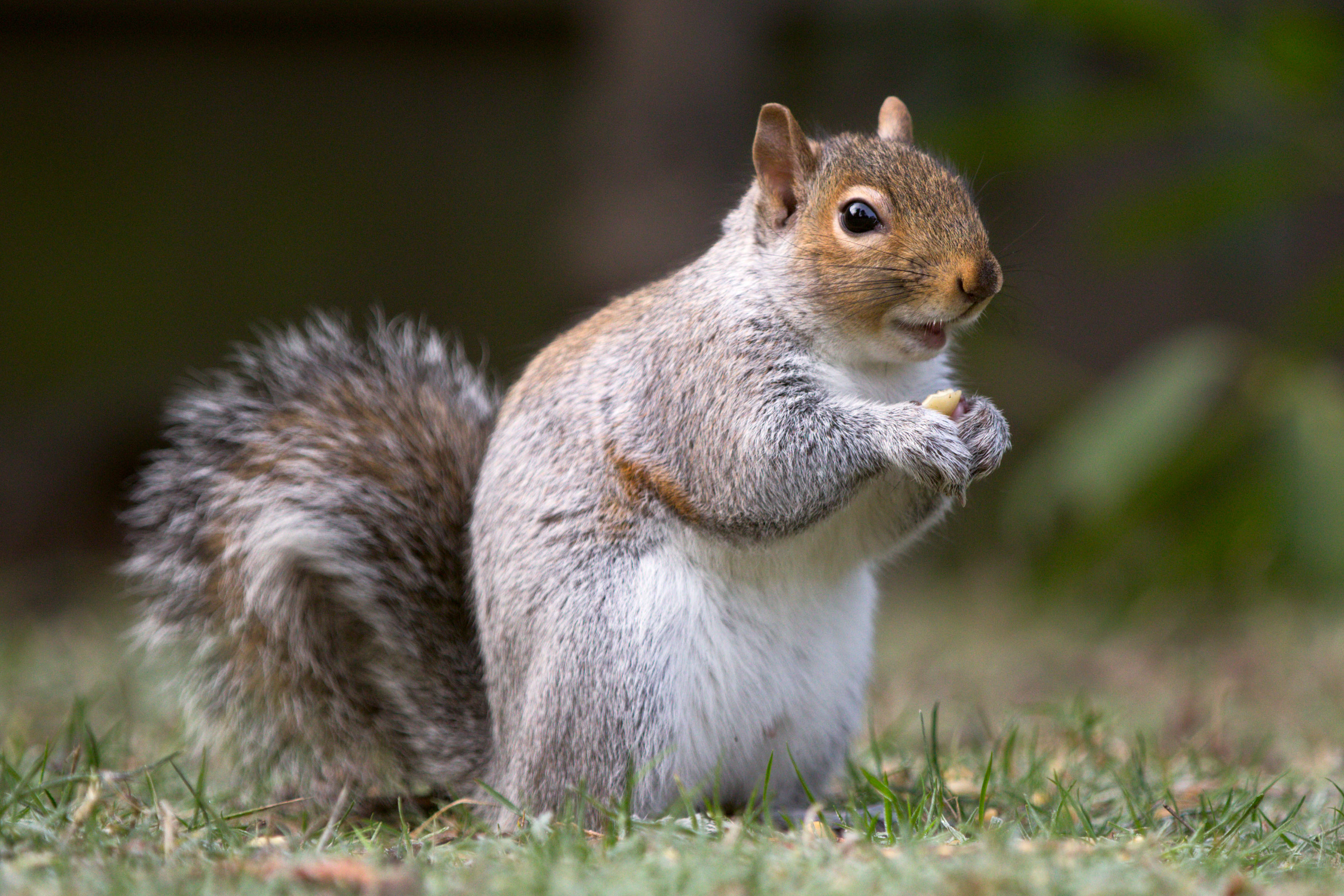 Of Bullies, Cowards and Decapitated Squirrels – The Hope Blog