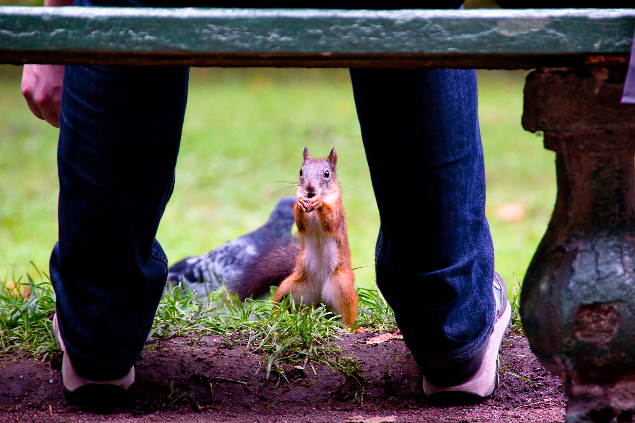 Squirrel, Animal, Close-up, Cute, Looking, HQ Photo