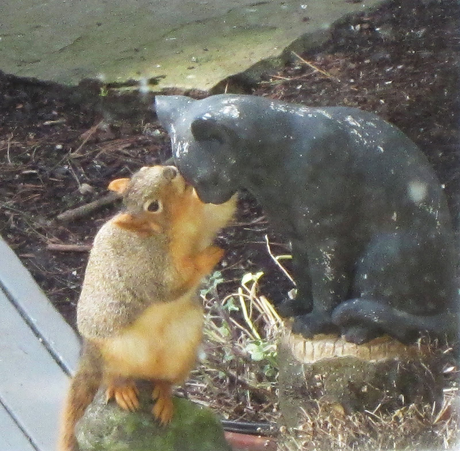 Cat and Squirrel | Lighthearted Press