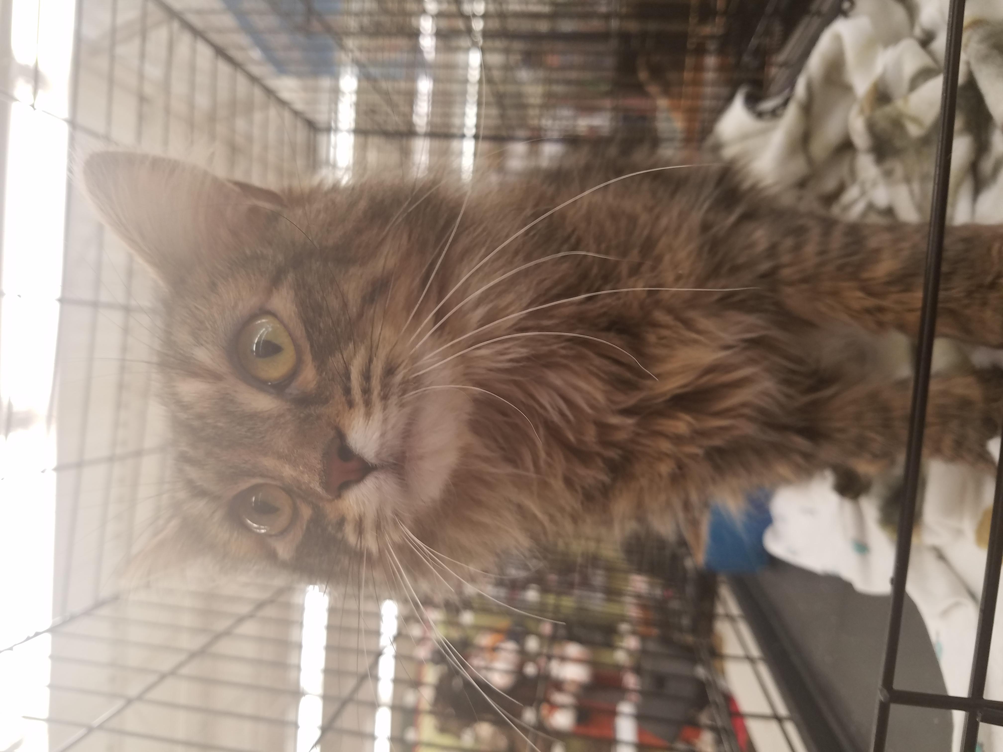 Cat for Adoption – Squirrel, near Vernal, UT | Petfinder