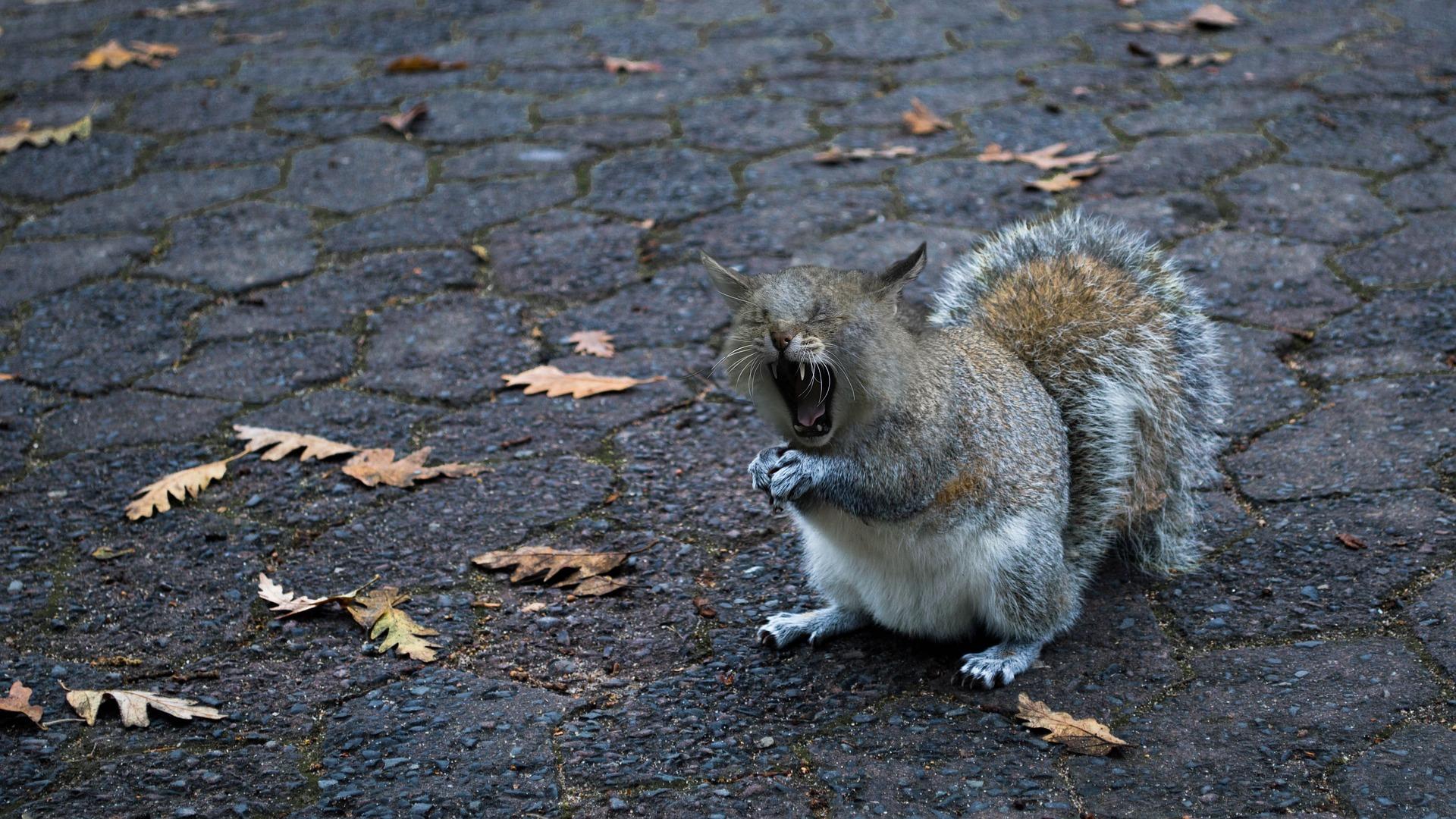 Squirrel Cat, Wild, Squirrel, Cat, Animal, HQ Photo