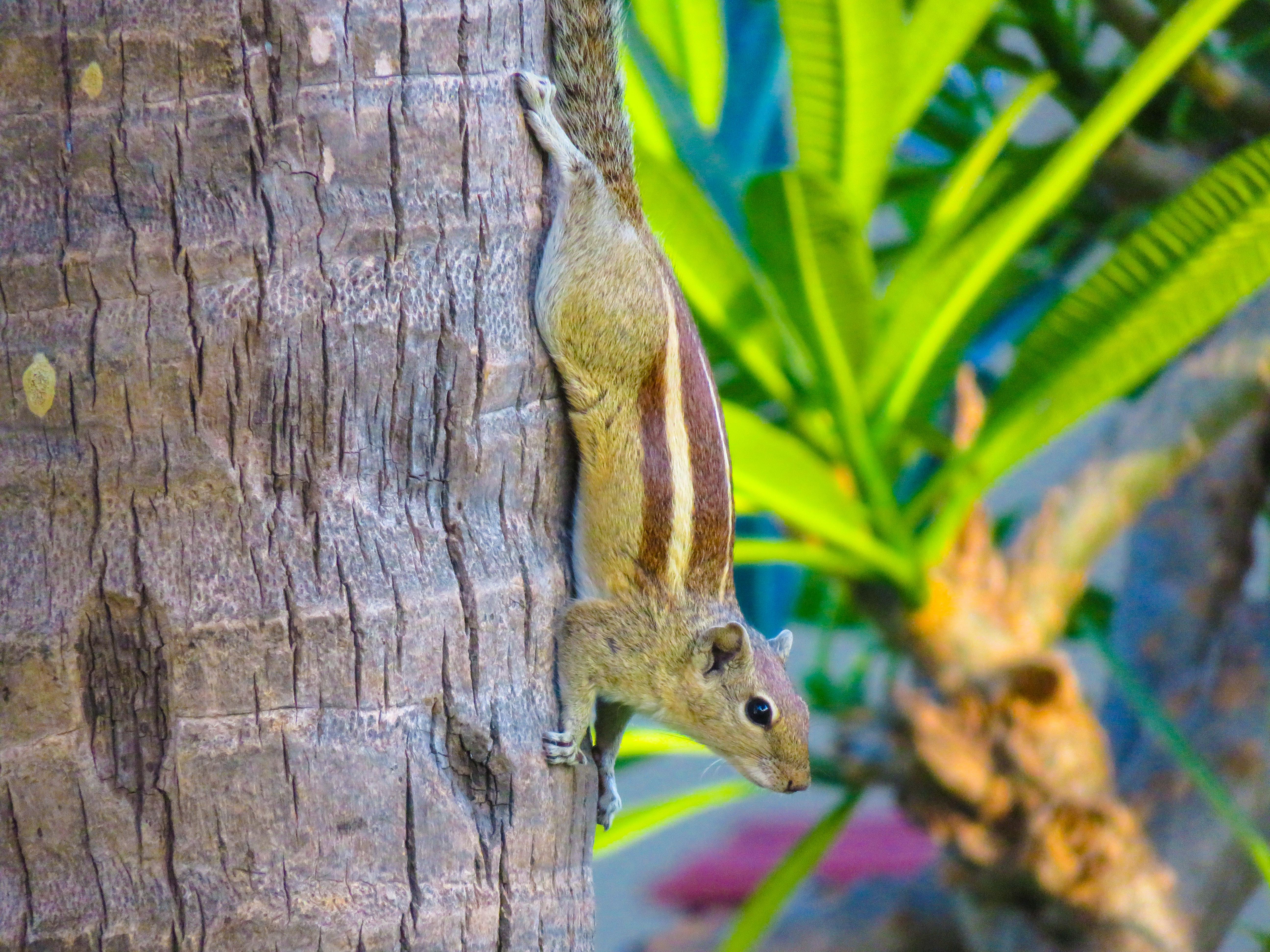 Squirrel Encounter, Squirrel, Tree, Plants, Climbing, HQ Photo