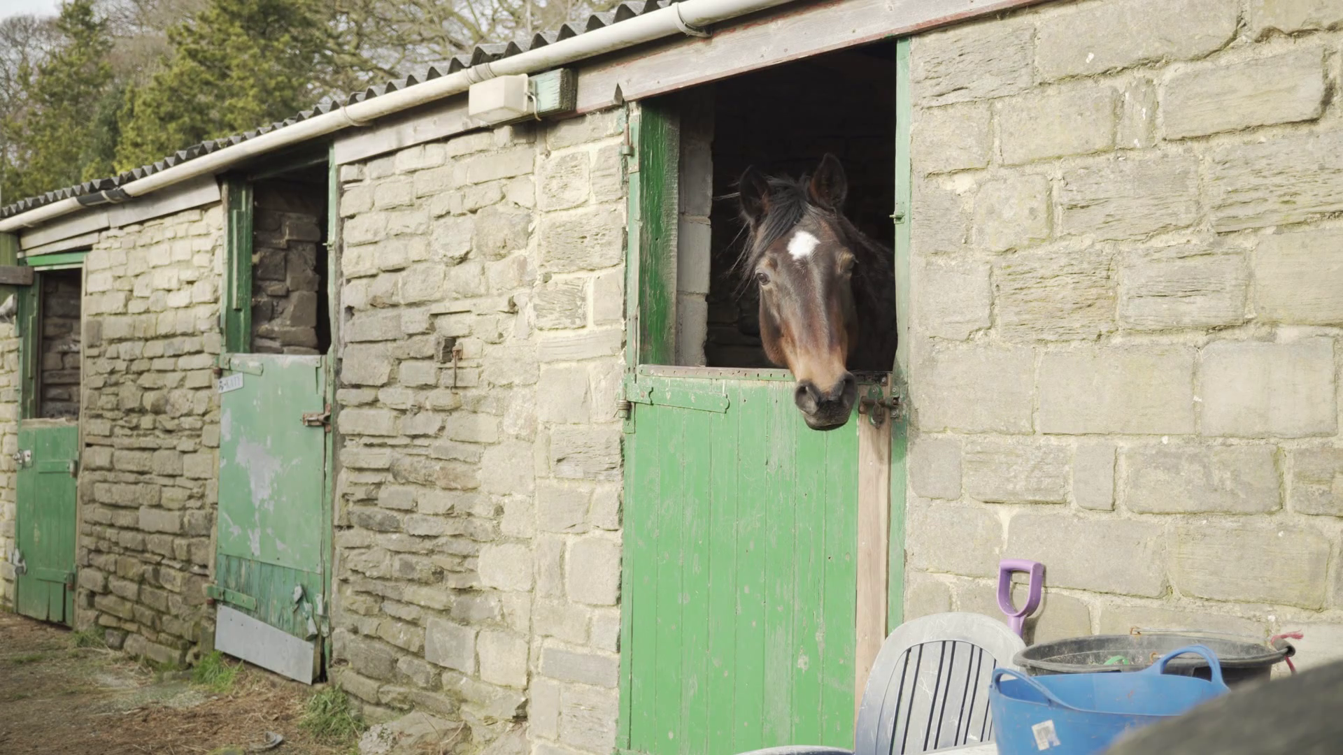 A Horse looking out of an half open stable door Stock Video Footage ...