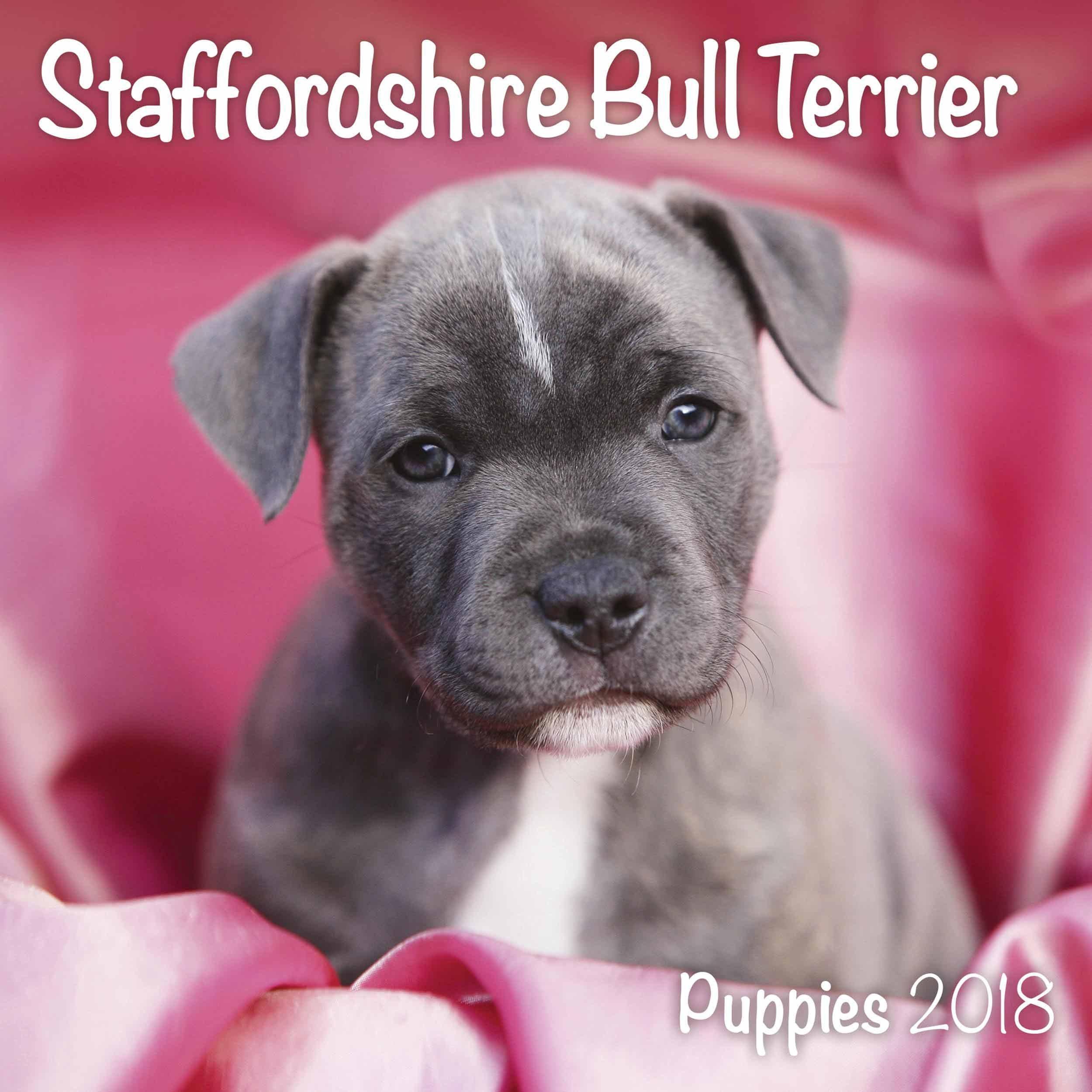 Staffordshire Bull Terrier Puppies M: 9781785802607: Amazon.com: Books