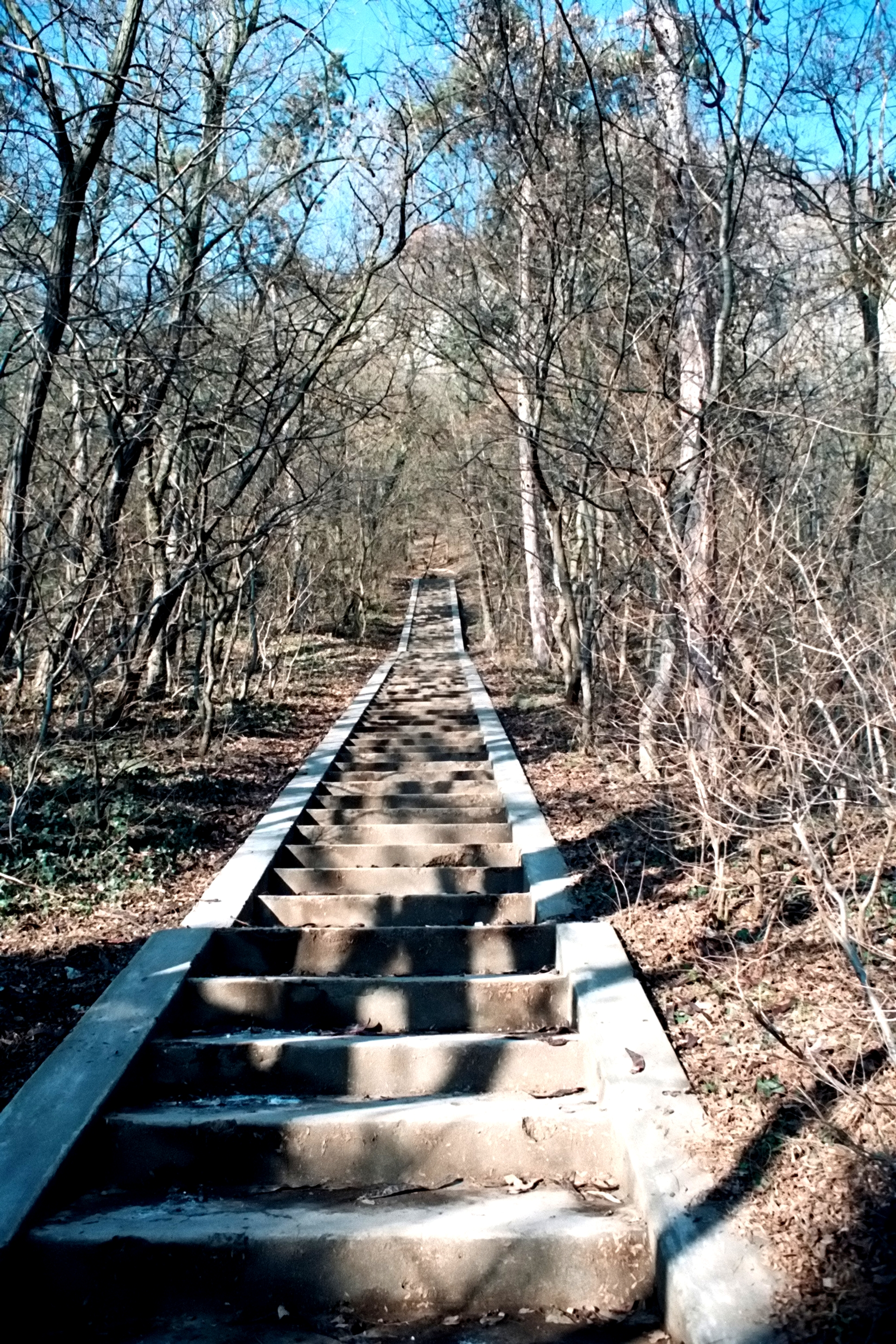 Stairs to nowhere, Barren, Forest, Garden, Path, HQ Photo