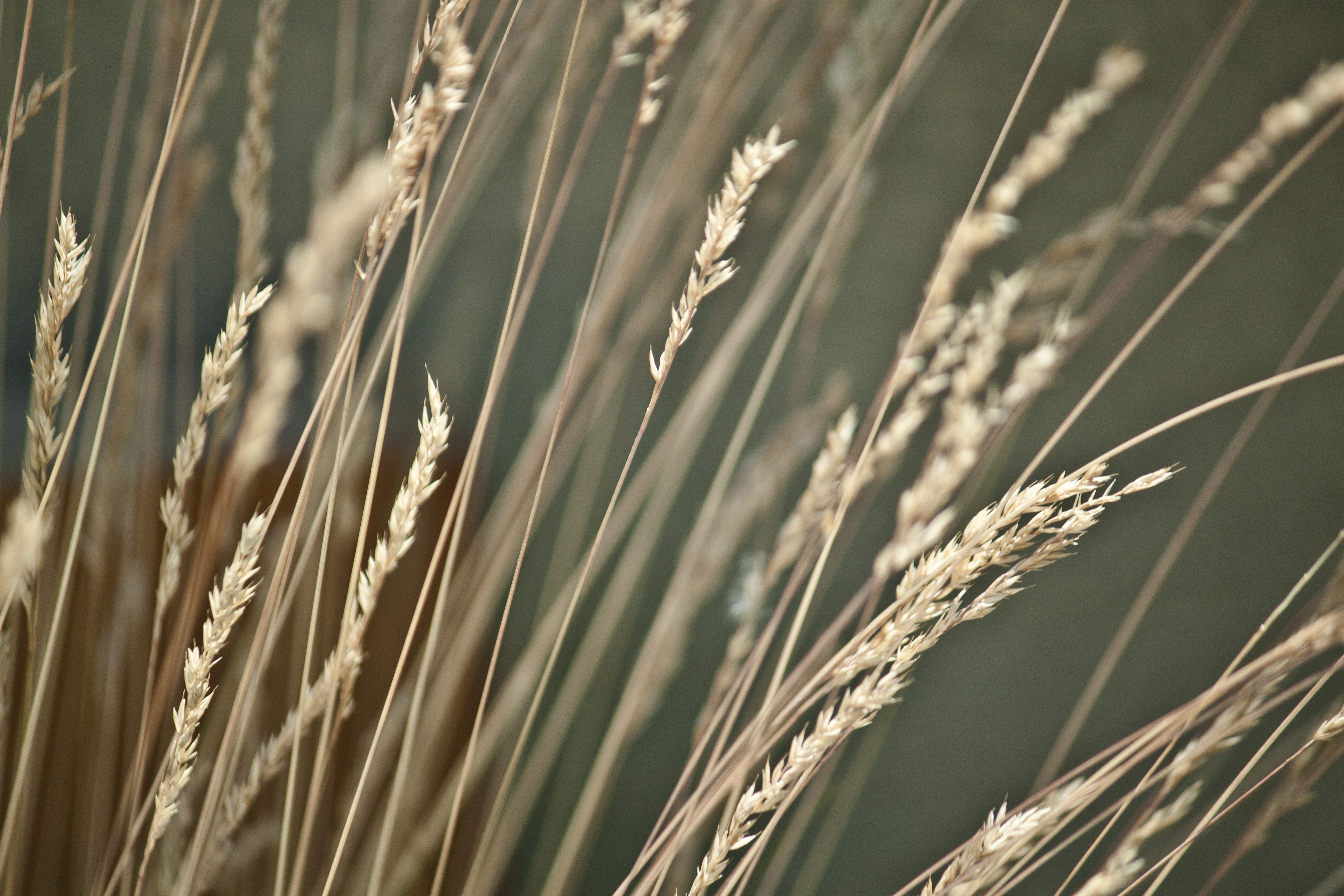 Stalks in the wind photo