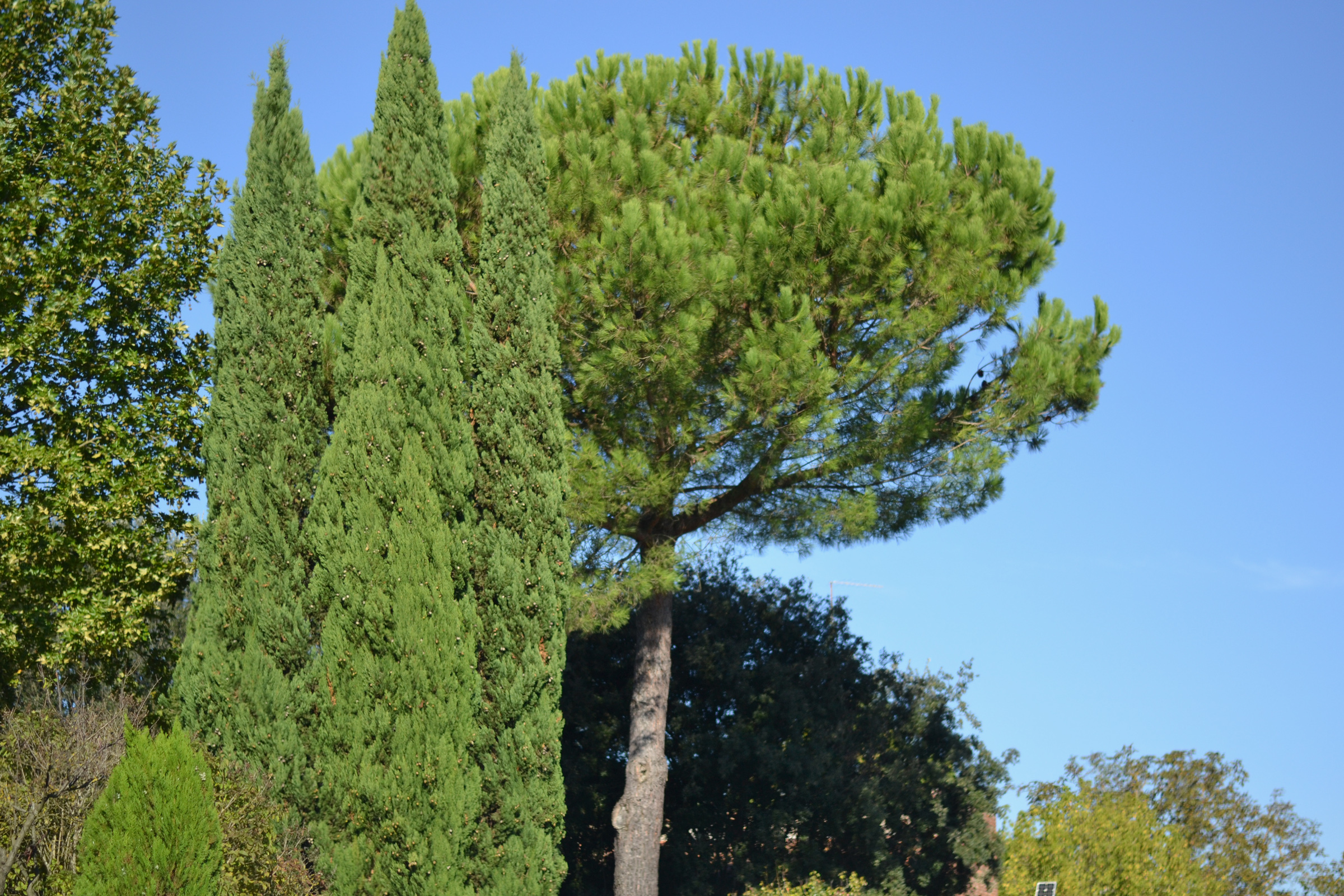 Stand Alone, Greenery, Italy, Landscape, Trees, HQ Photo
