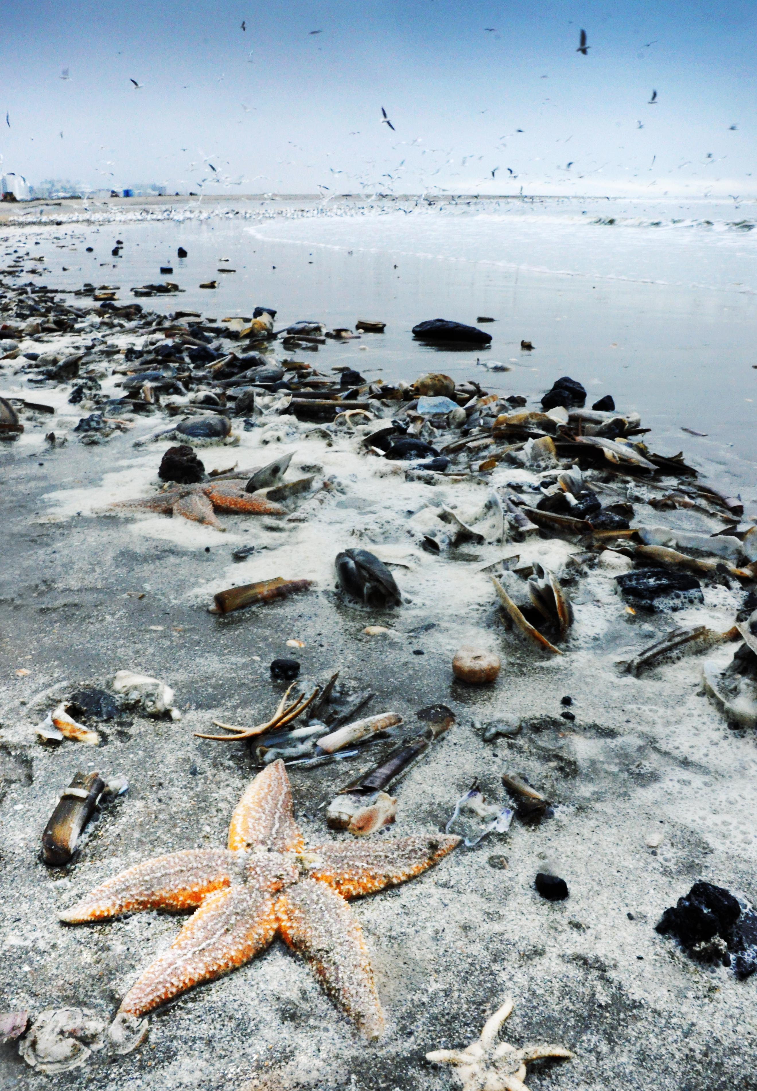 Starfish and shells washed to shore photo