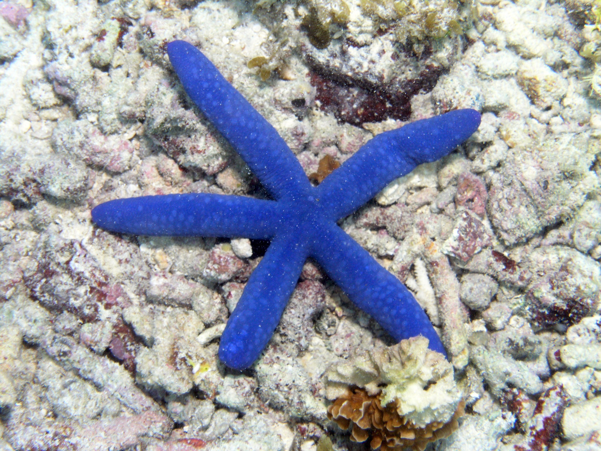 Starfish in the bottom of the ocean photo