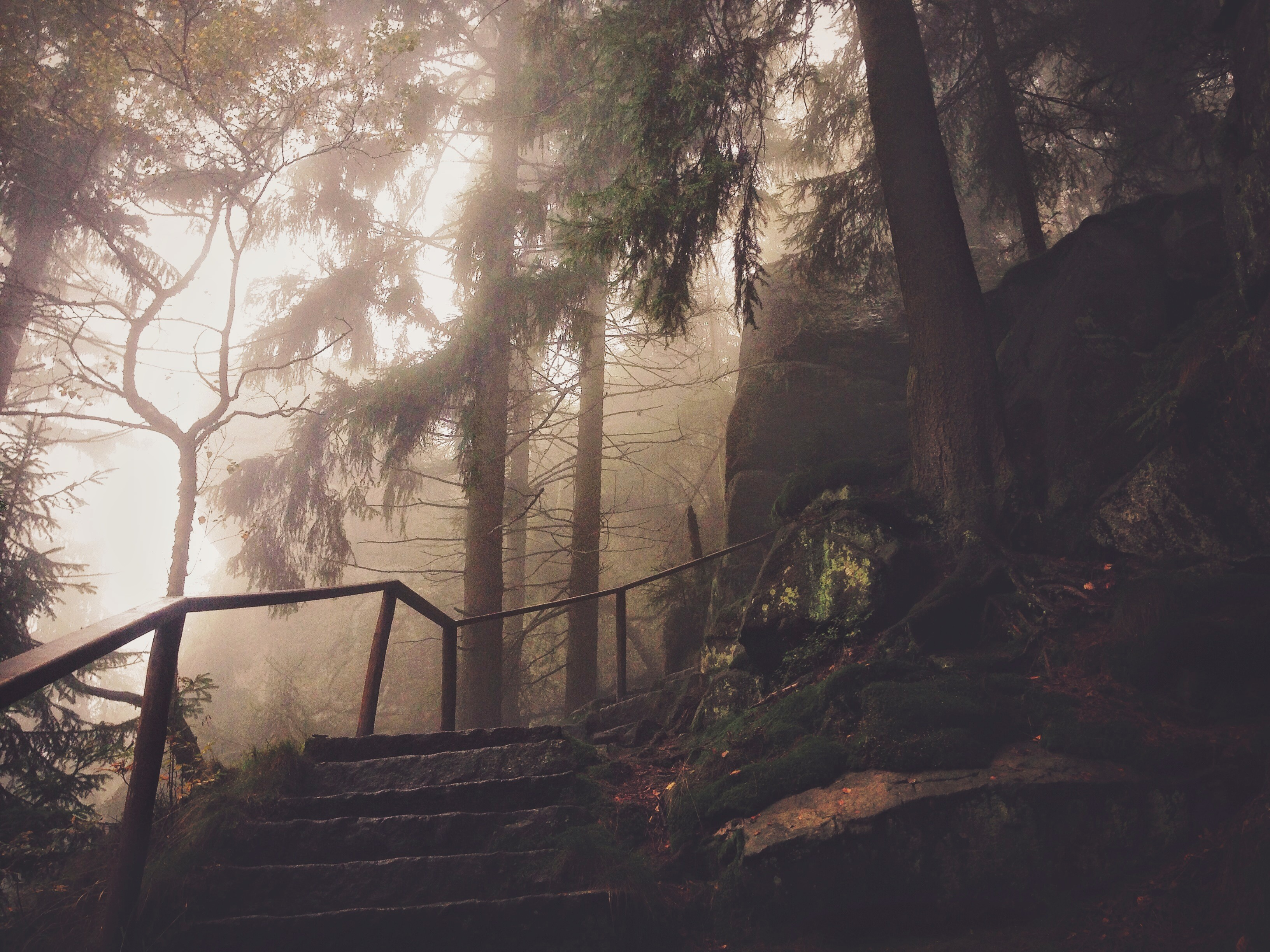 Steps and Rail in Hazy Park, Background, Fog, Forest, Haze, HQ Photo