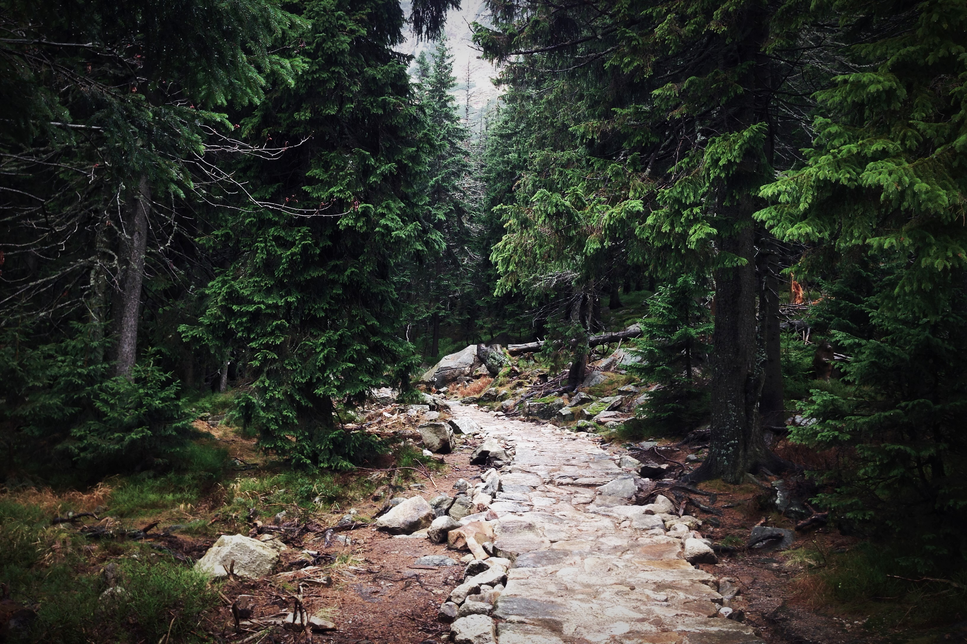 Stone Path in Park, Evergreen, Forest, Nature, Outdoor, HQ Photo