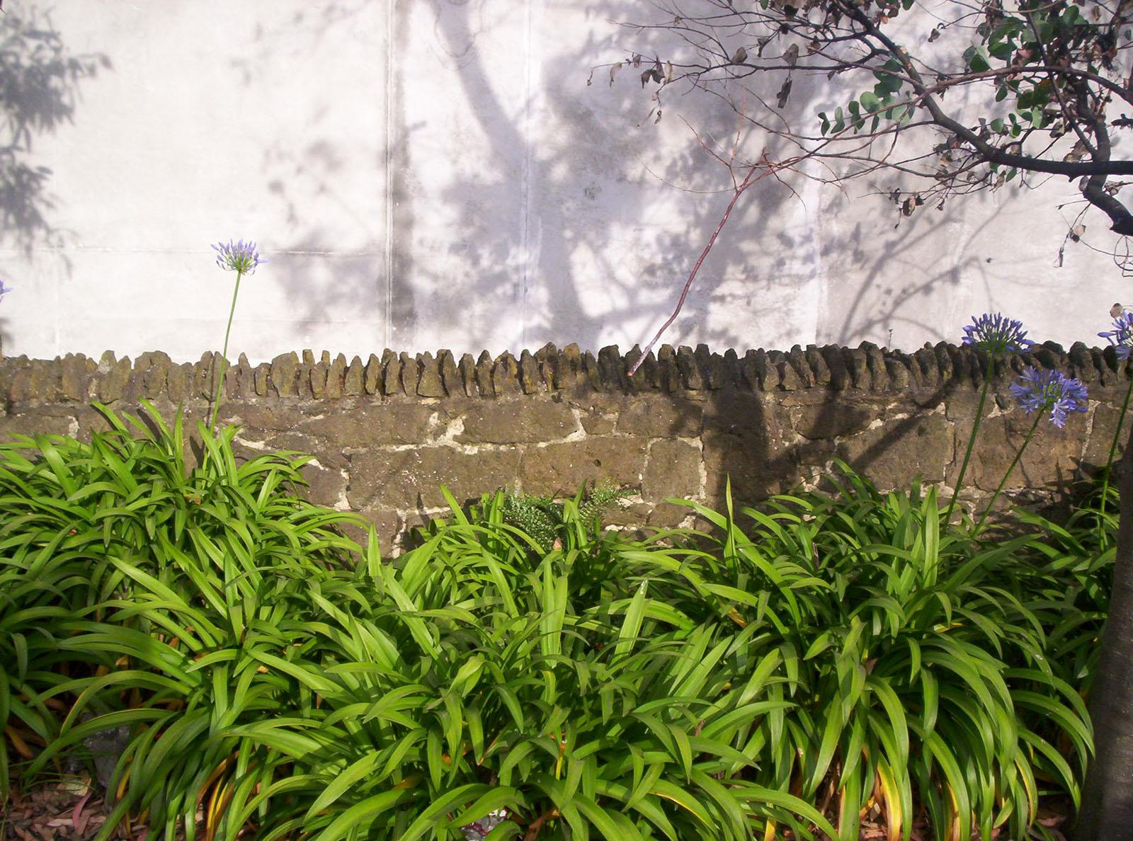 Stone Wall, Agapanthus, Bspo06, Concrete, Dunedin, HQ Photo