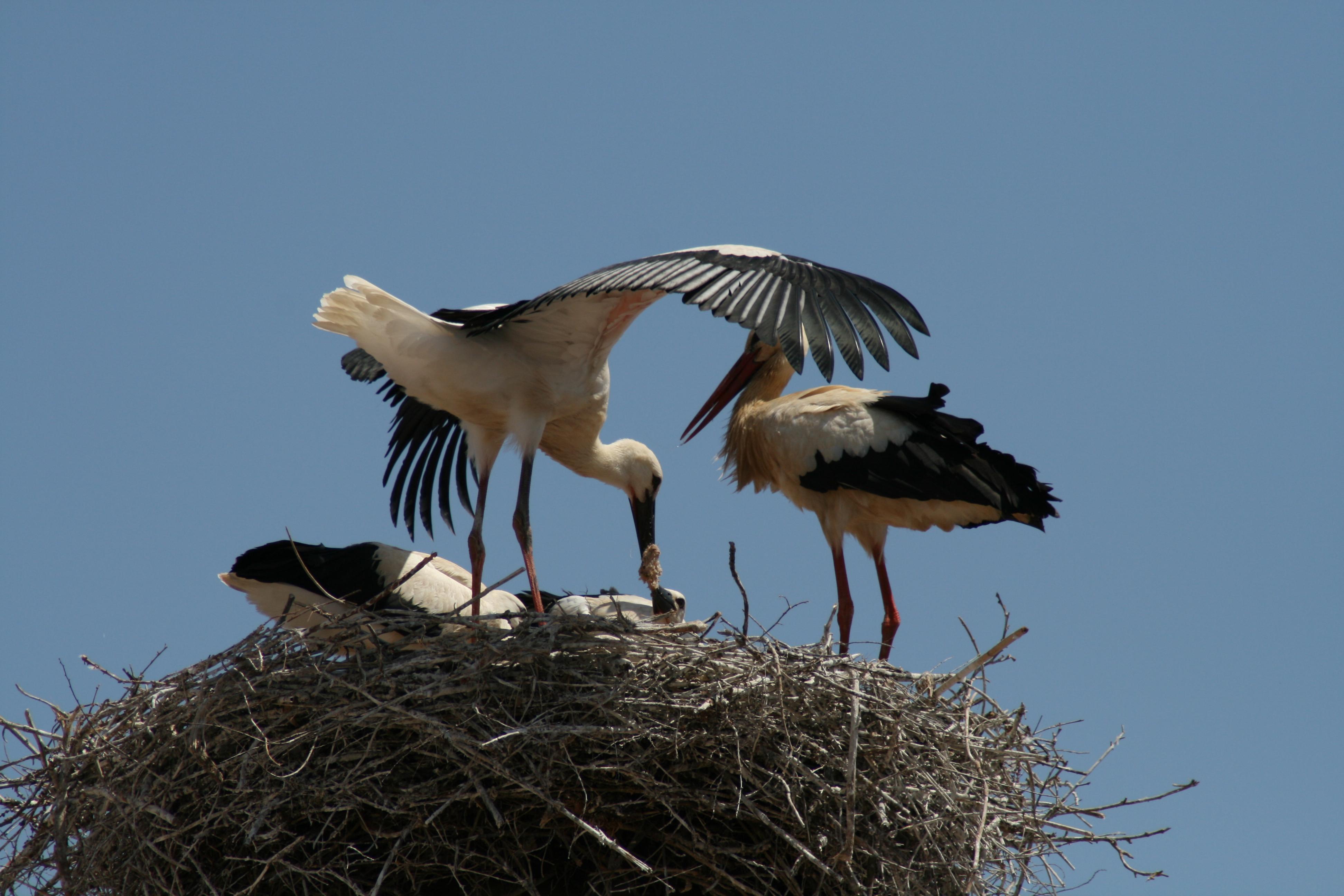 Stork nest photo