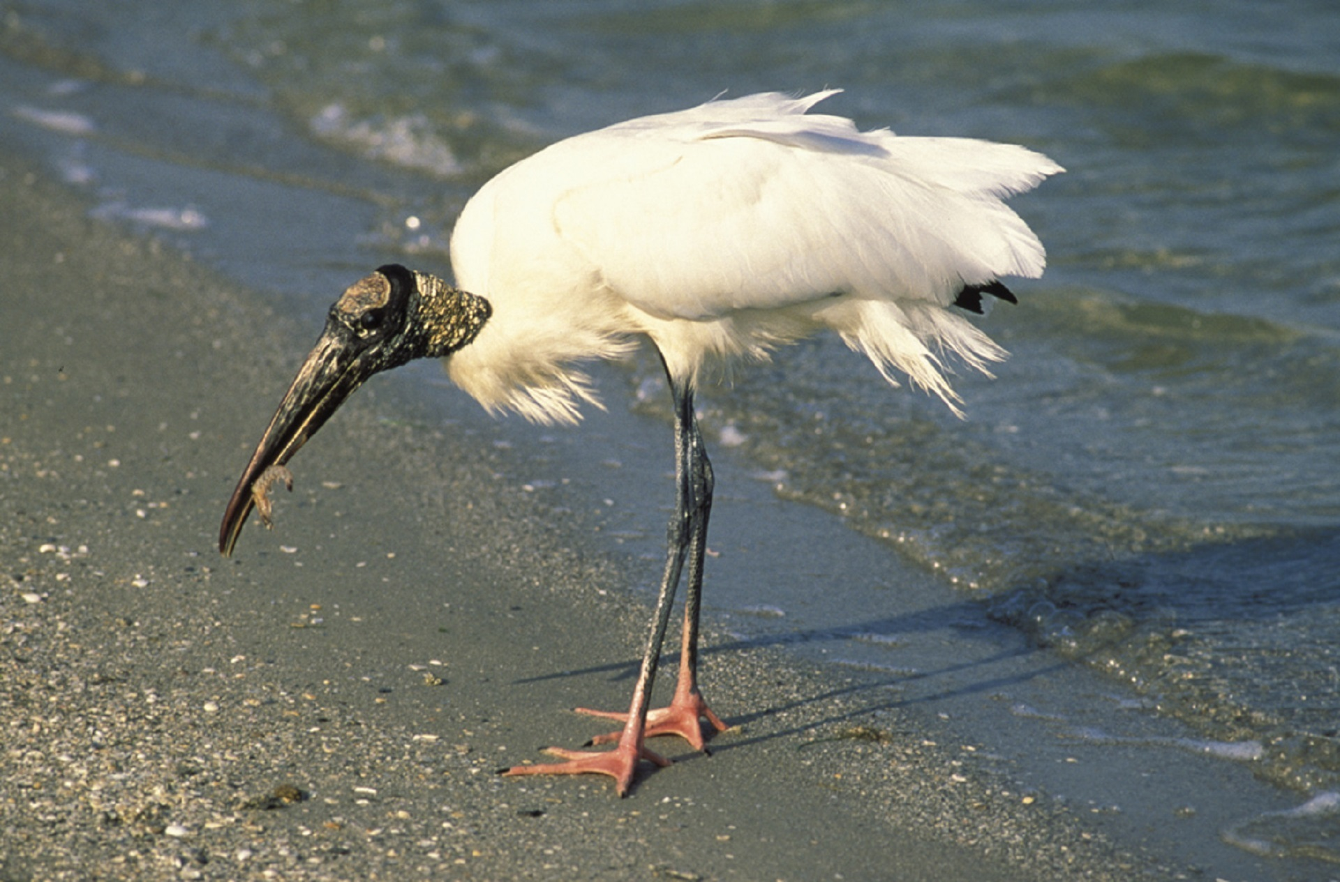 Stork on the shore photo