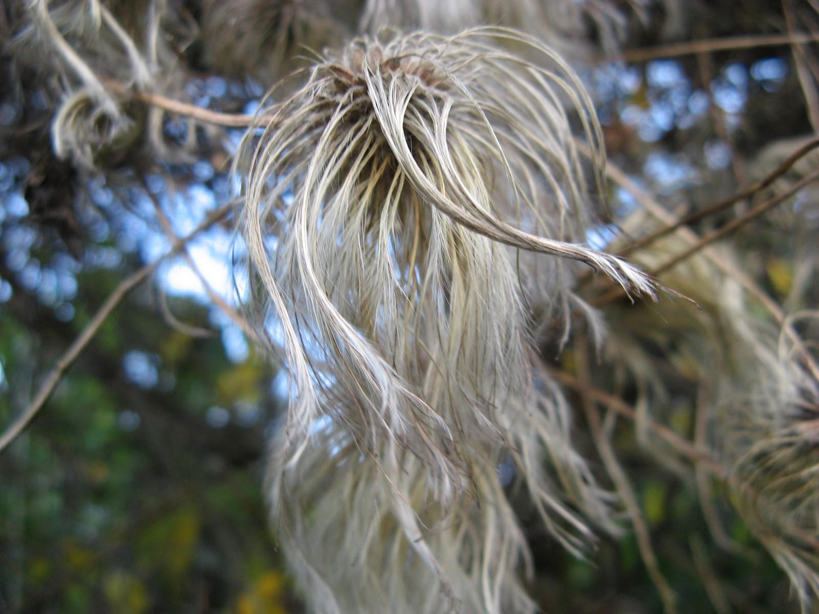 hairy Bush up close pic