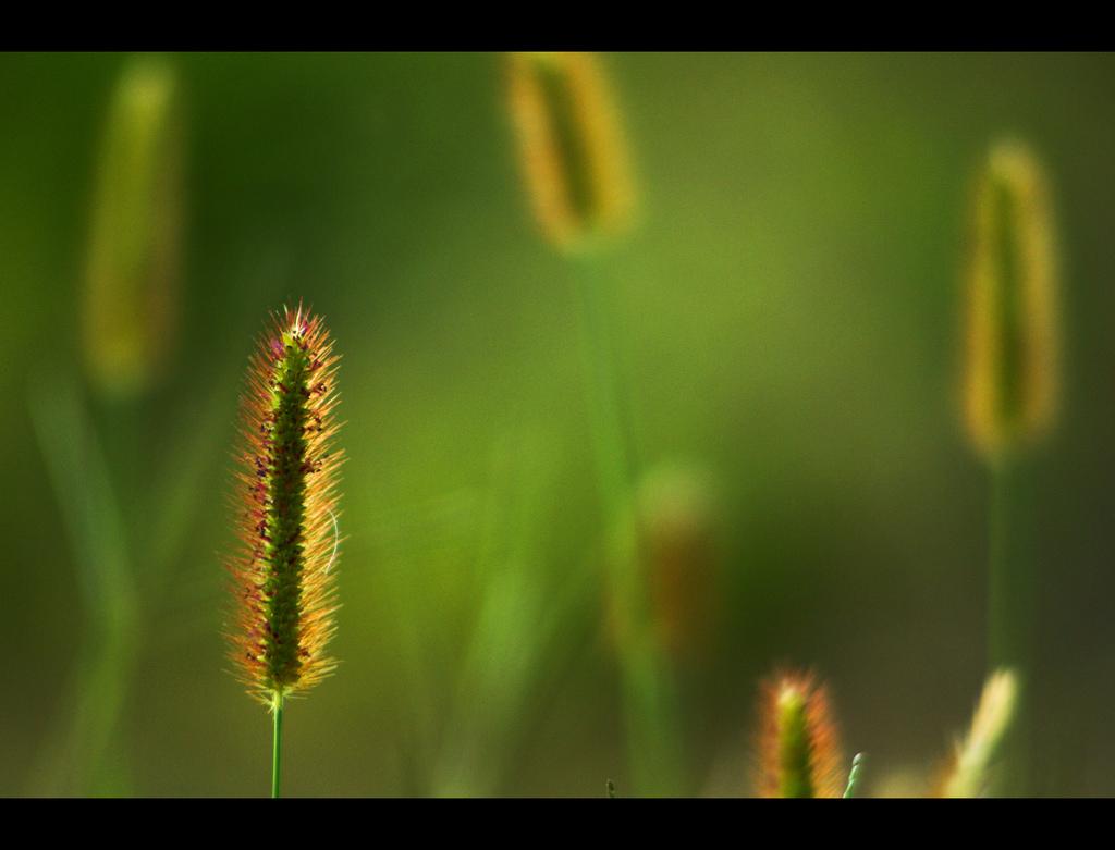 Straws, Blur, Green, Plants, HQ Photo