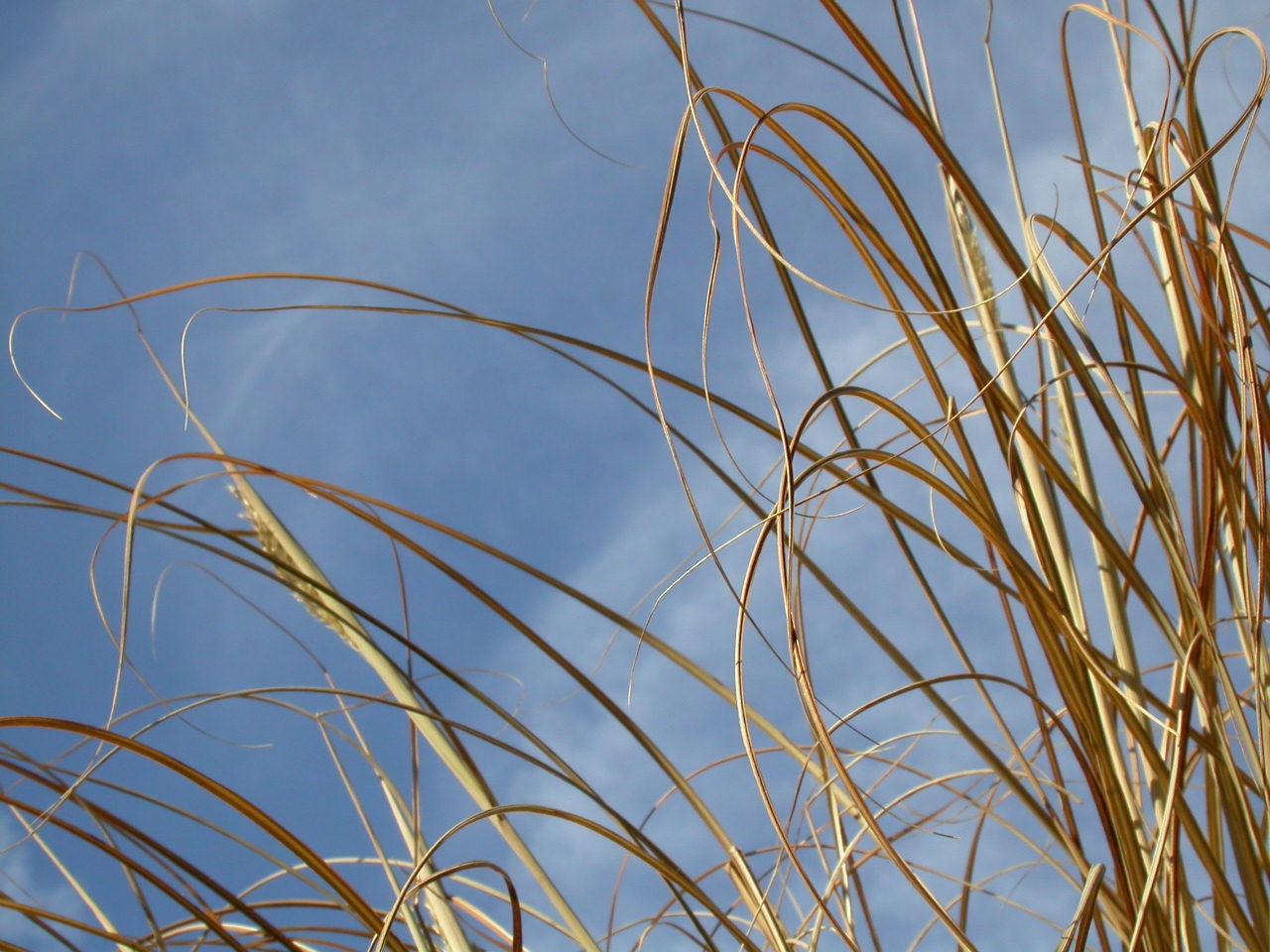 Straws against the sky photo