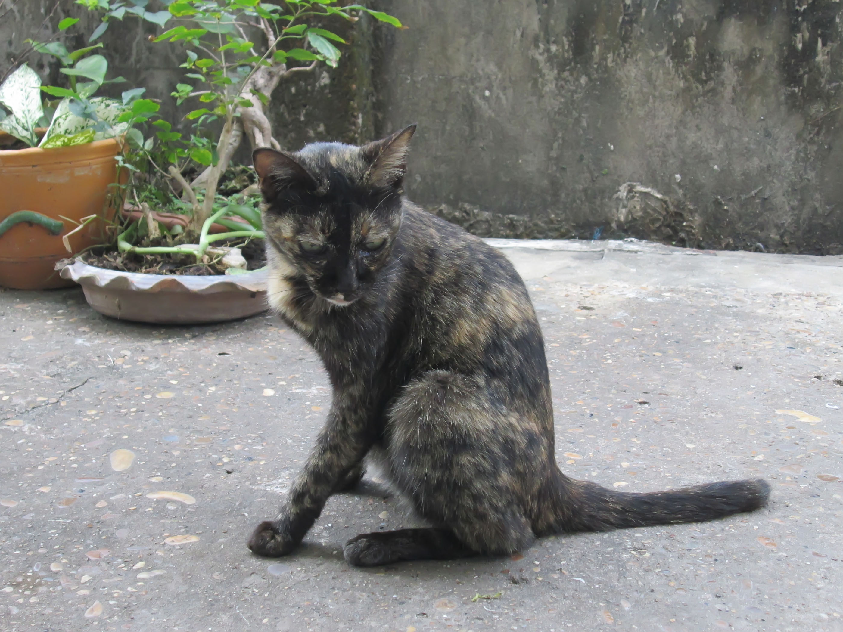 Free Photo Stray Cat Animal Cat Help Free Download Jooinn